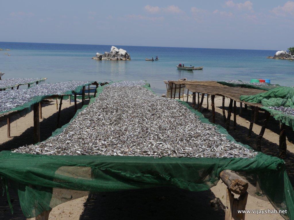 Drying Usipa, Chizimulu Island, Malawi