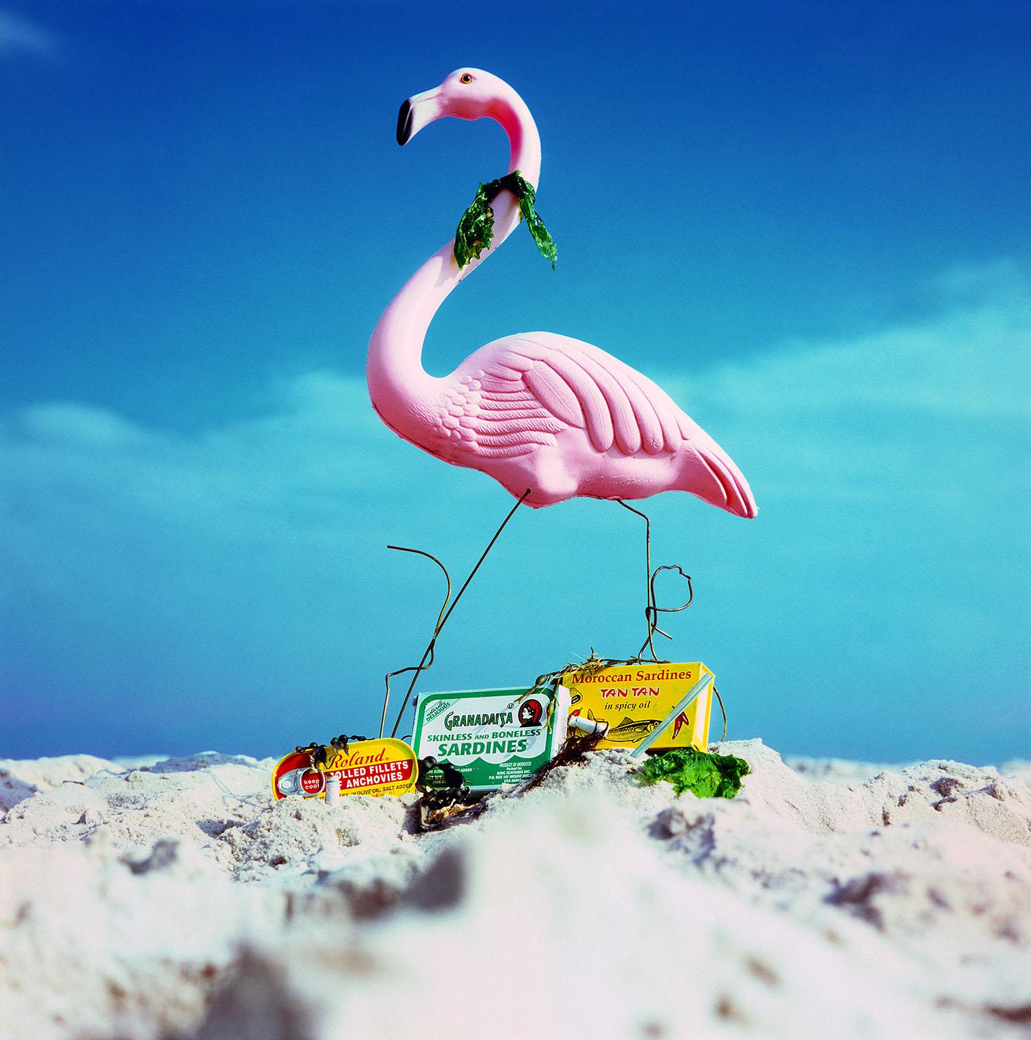 Flamingo_Best print version_March 2014.jpg