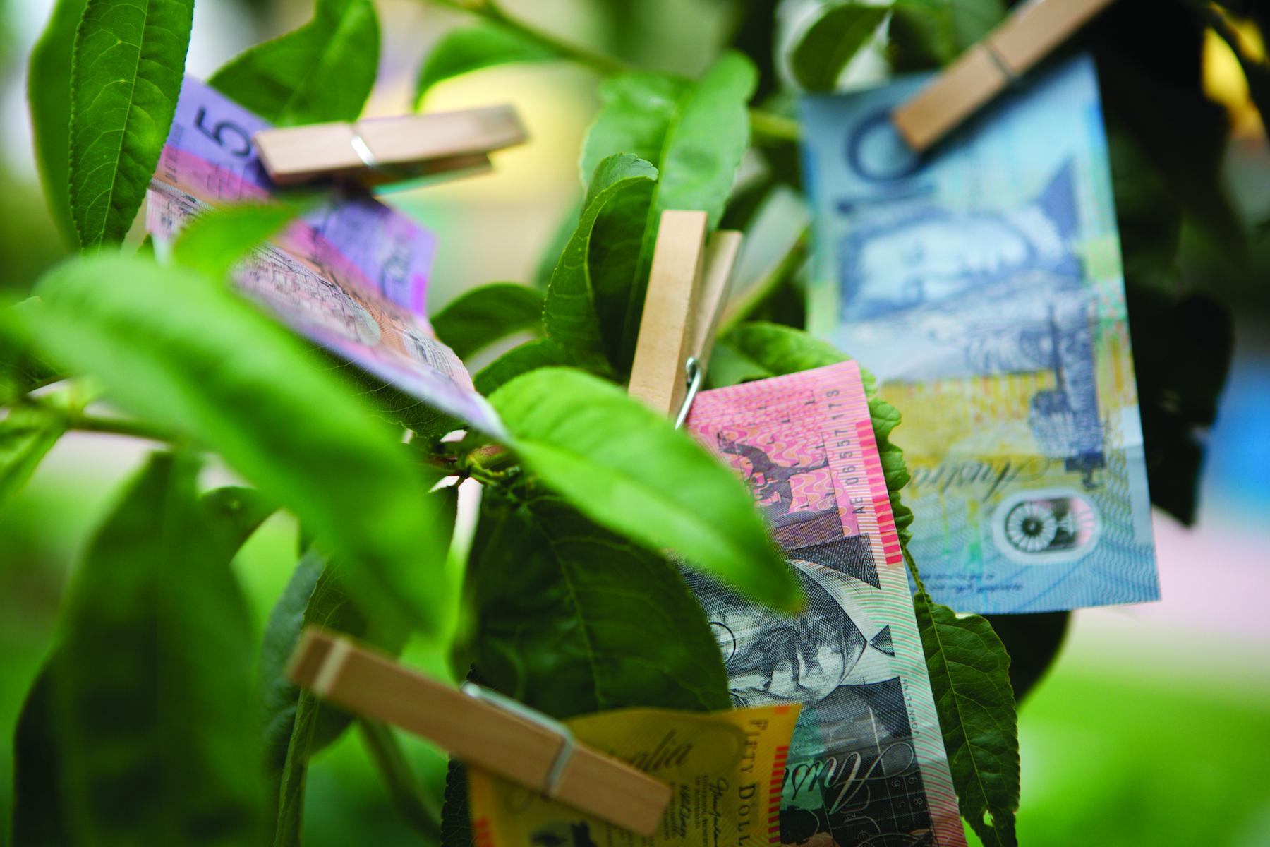 Money Tree CMYK.jpg