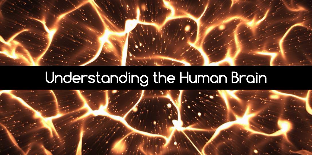 Understanding the Human Brain
