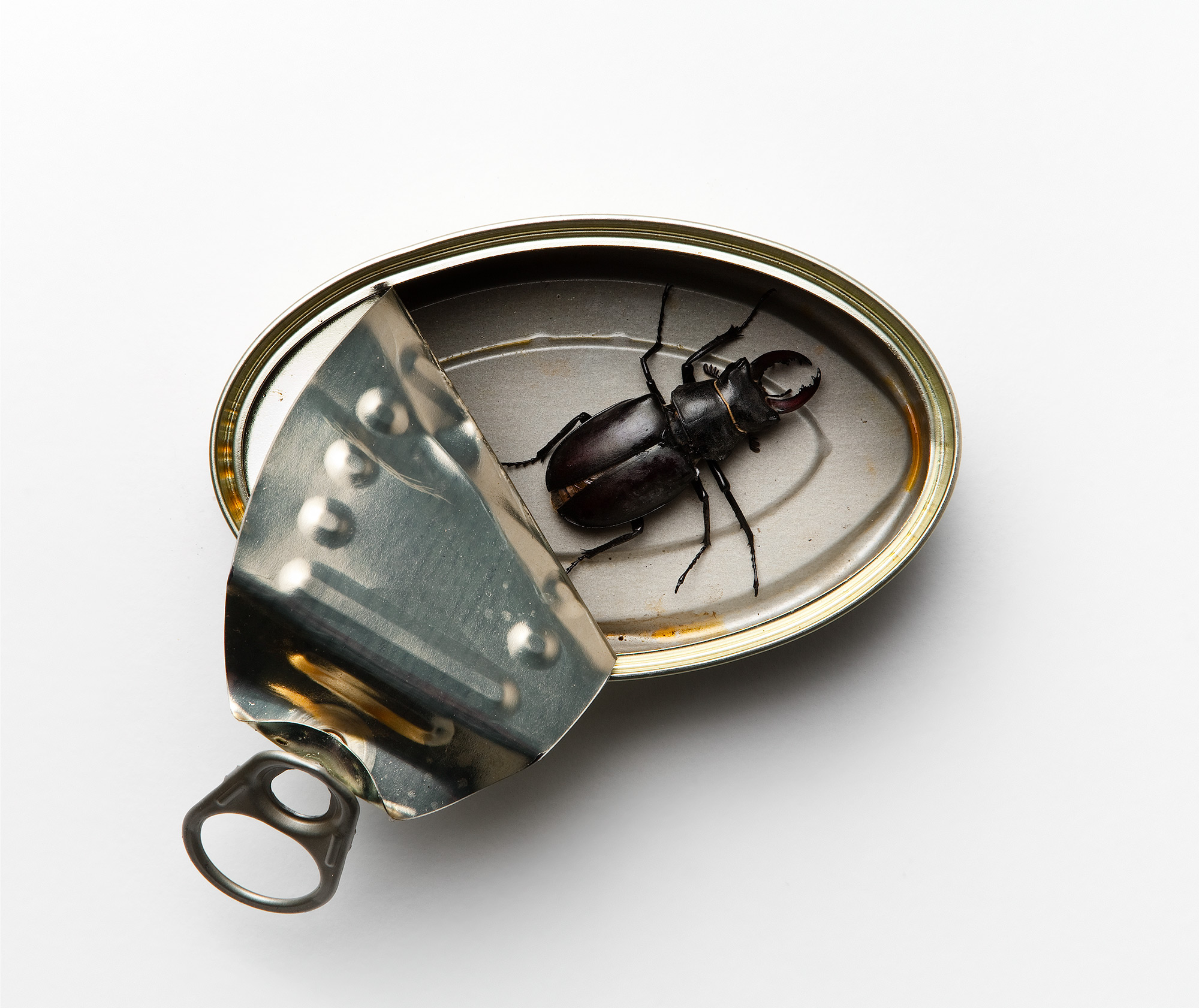 Beetle-tin.jpg
