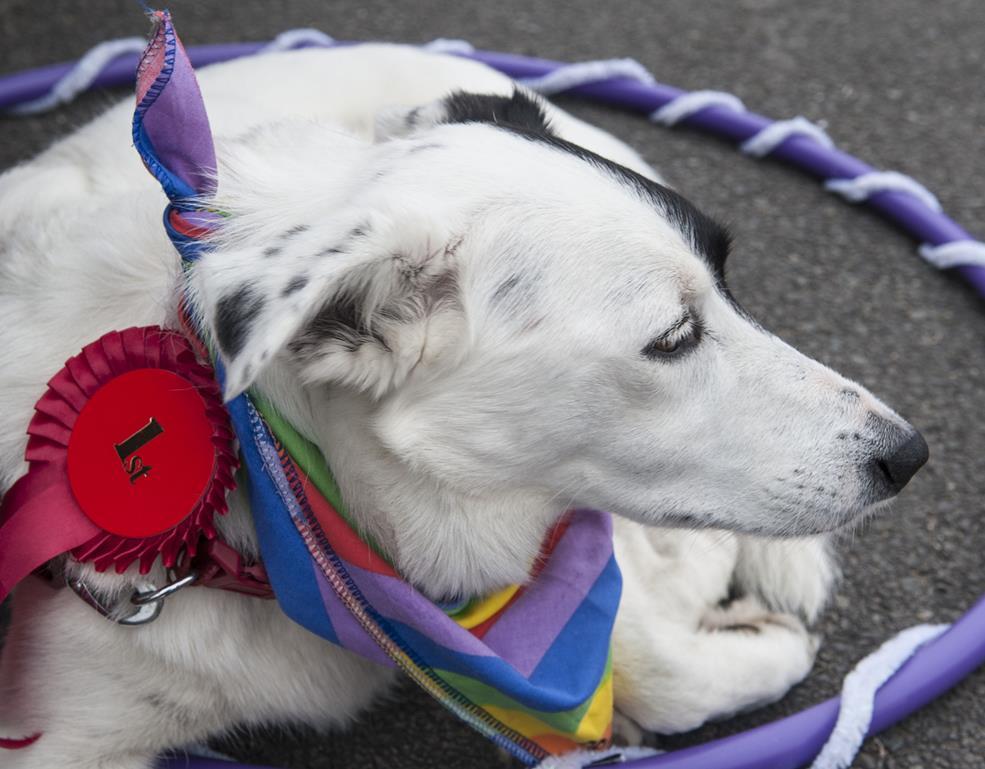 dogshow-winner (Copy).jpg