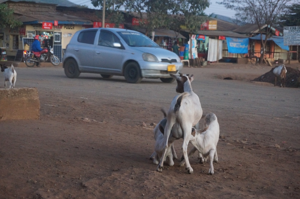 The view from our front porch in Babati, it was a high goat traffic evening
