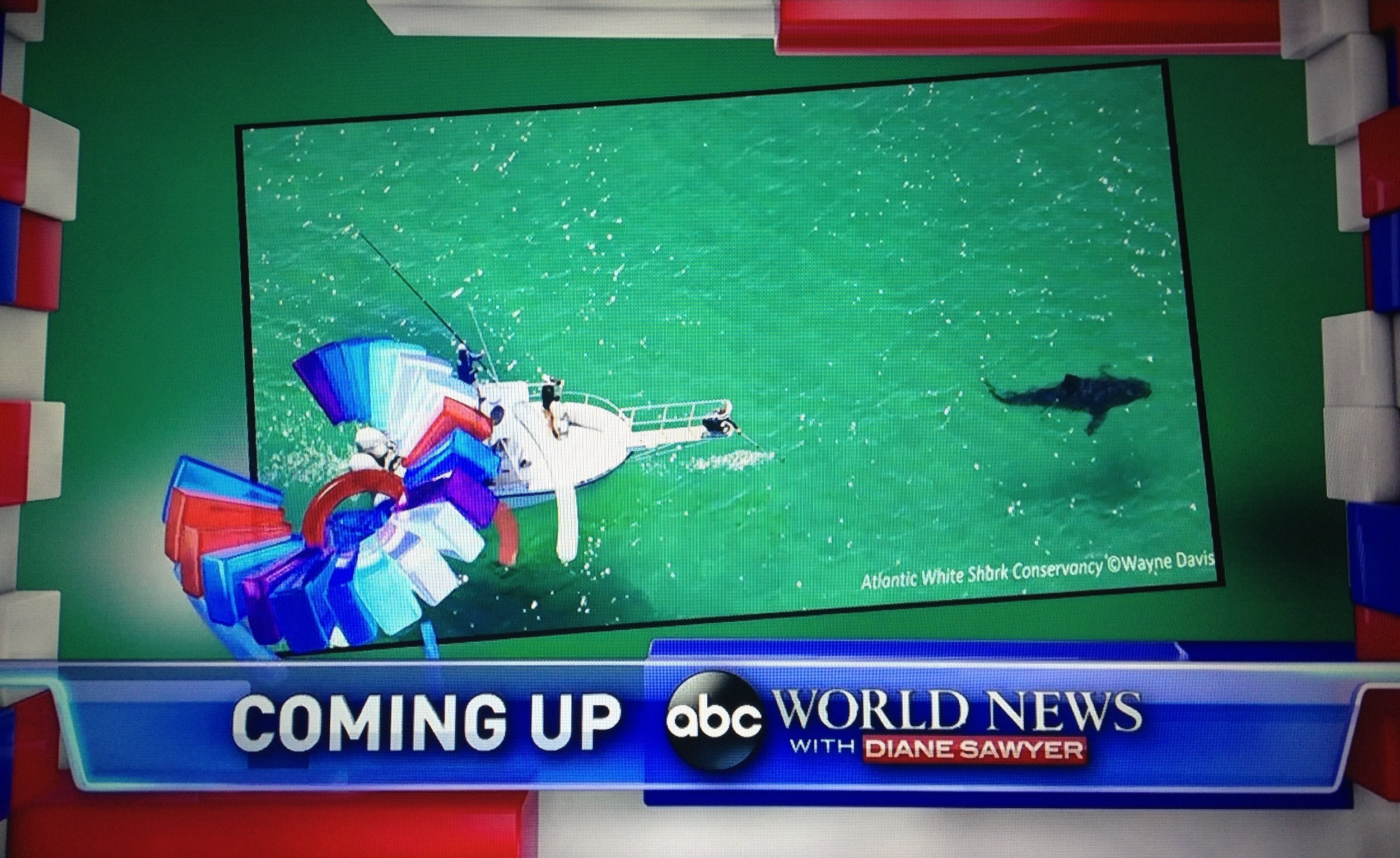 Atlantic White Shark Conservancy on ABC World News with Diane Sawyer.