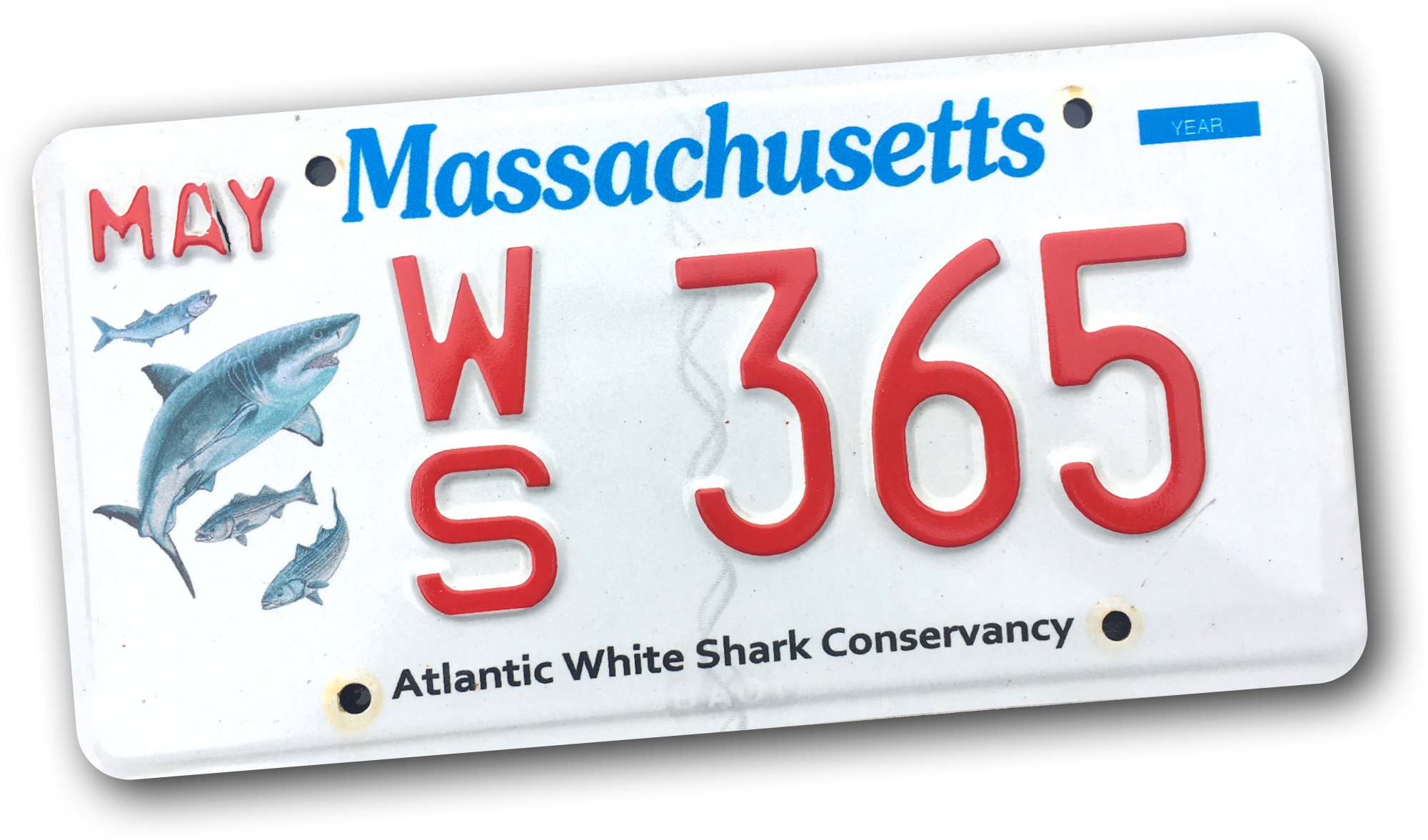 WS Plate.png
