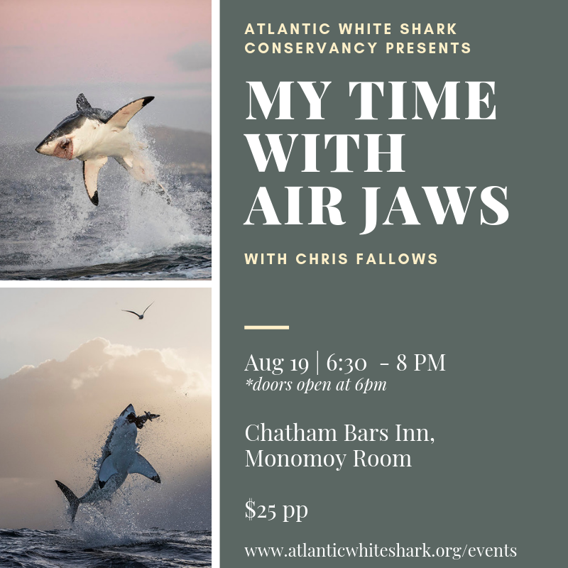 My Time with Air Jaws with Chris Fallows.png