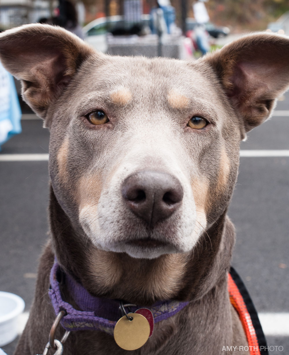 Tasha was a particular favorite of mine. She's available for adoption through Ramapo Bergen Animal Refuge, Inc. For more information, click through the picture.