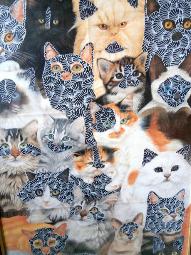 P+G_cats.jpg