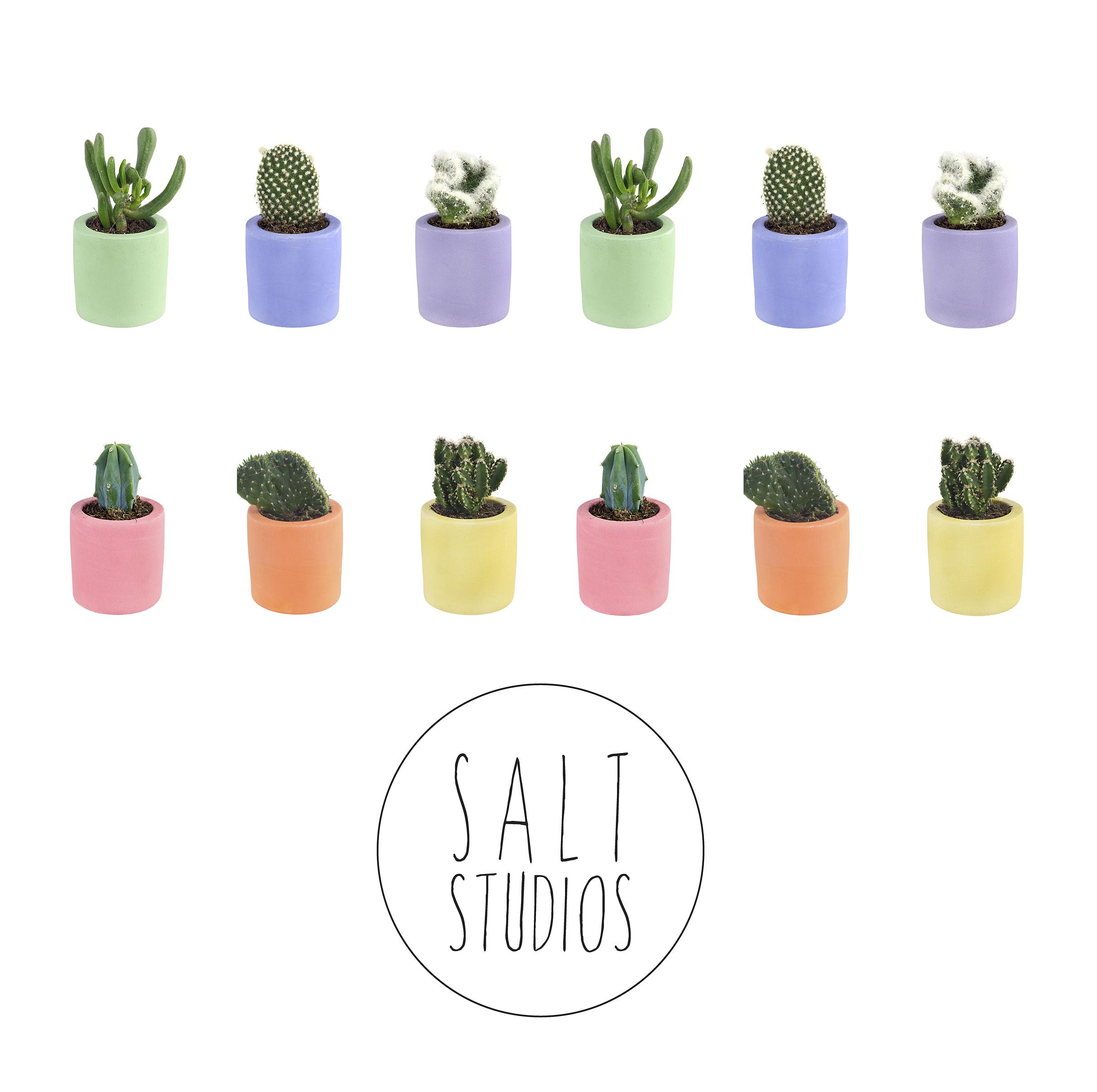 Salt Studios