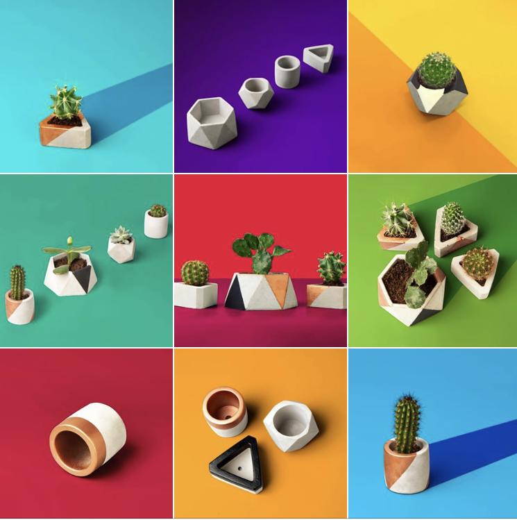 Cactus Joes