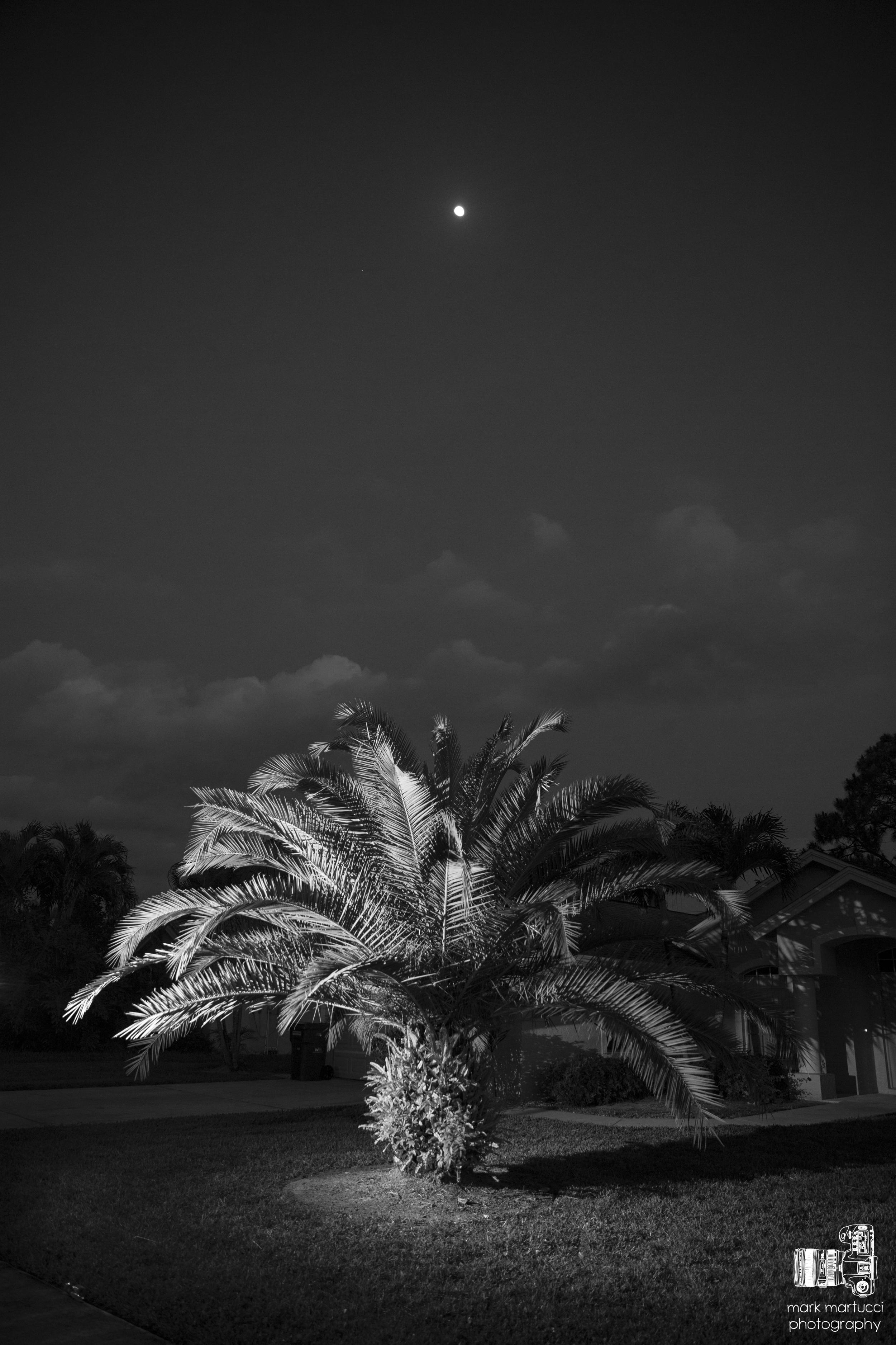 Florida May 2014_0503.jpg