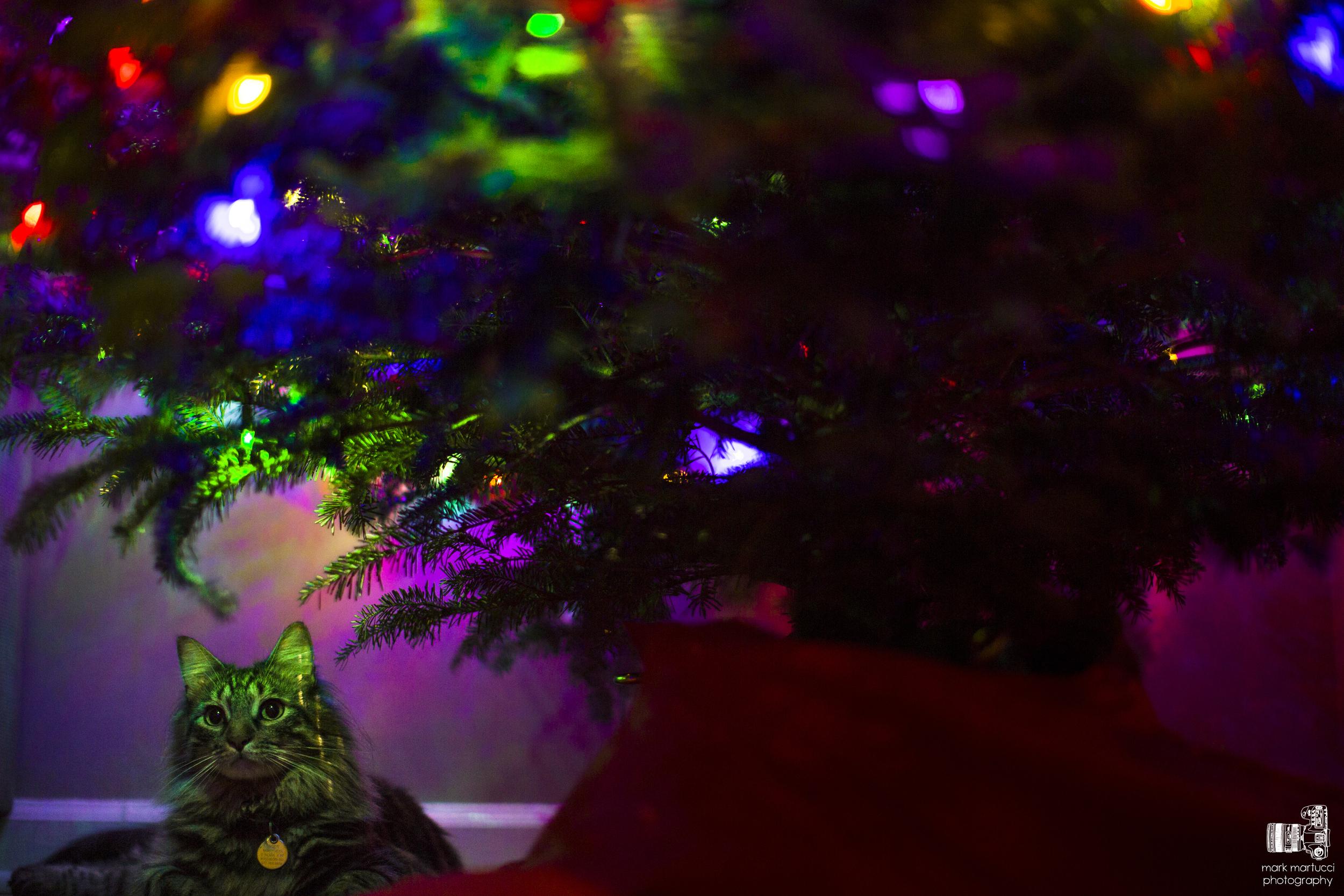 tiger under the tree 2.jpg