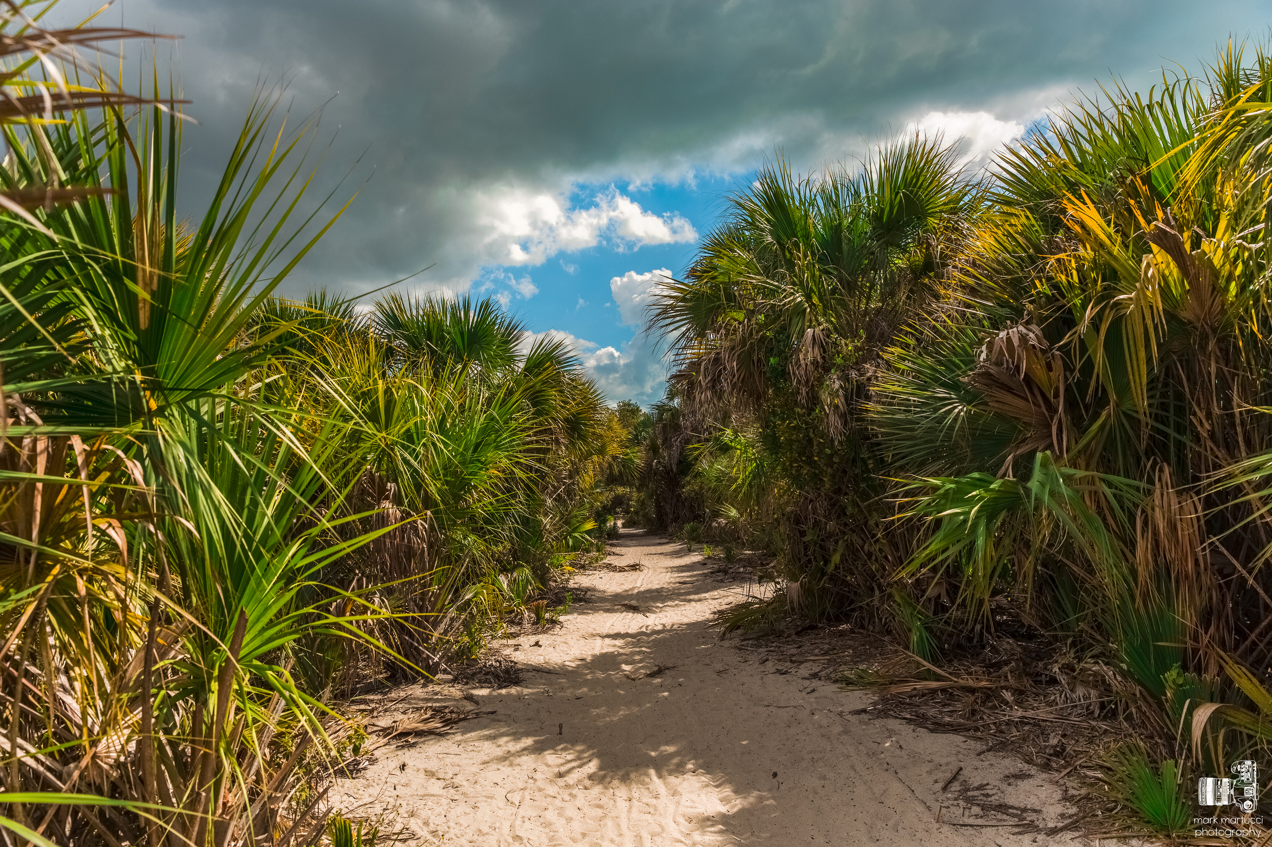 florida path.jpg