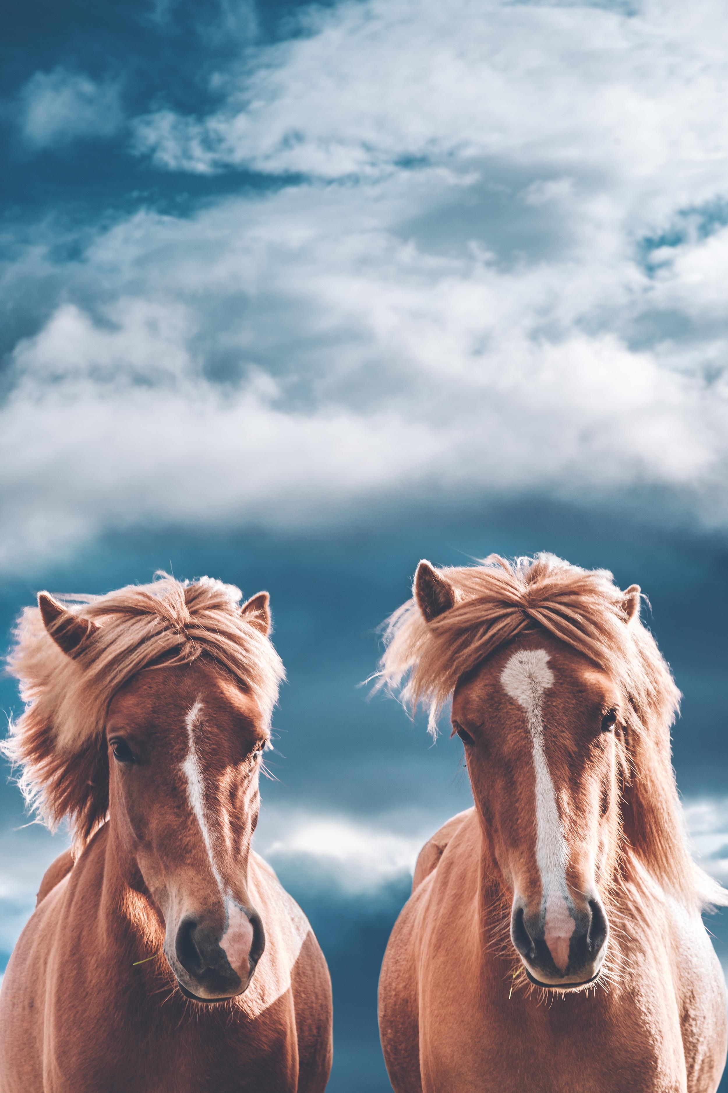 horses vertical.jpg