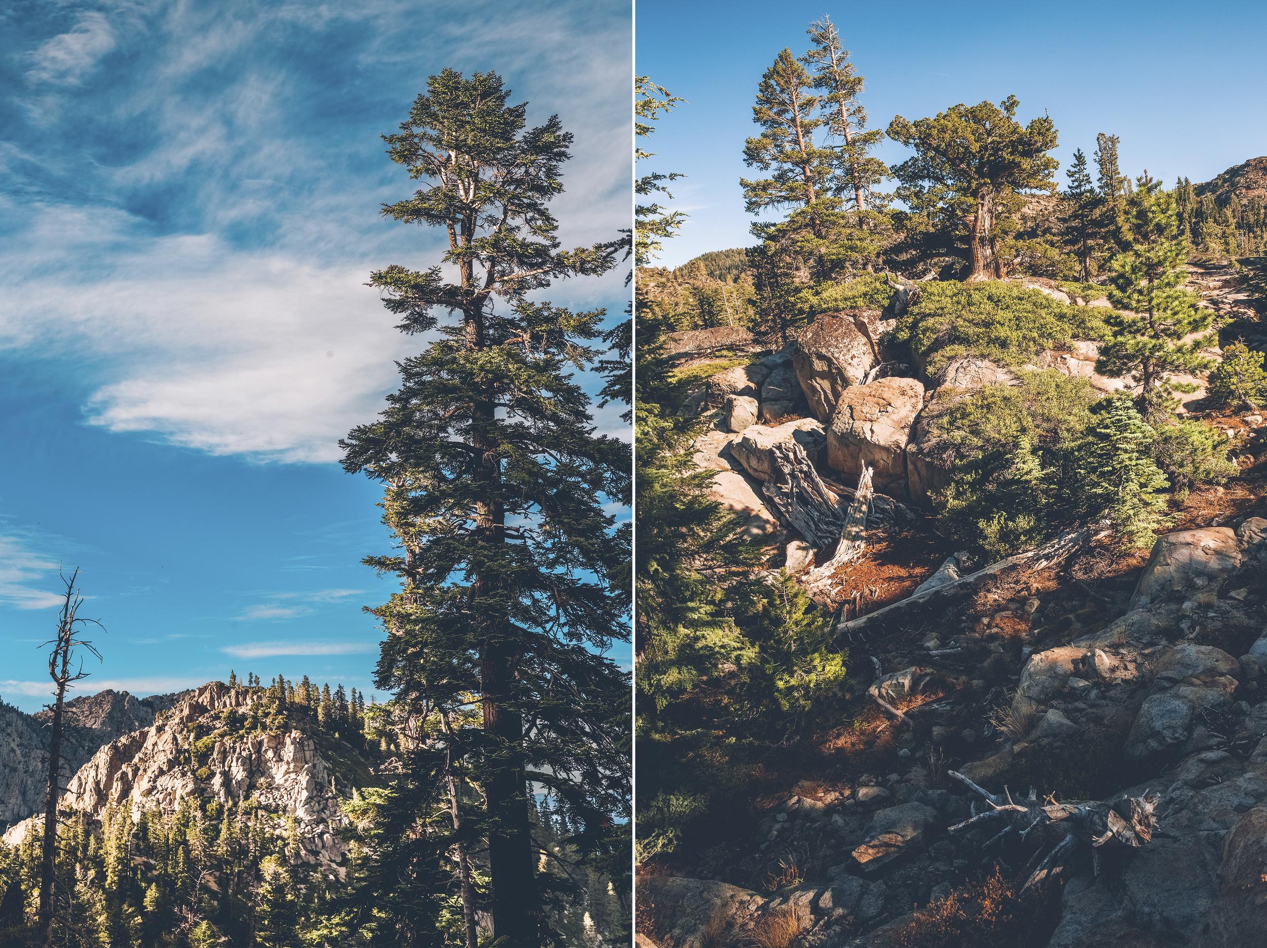vertical for blog 9.jpg