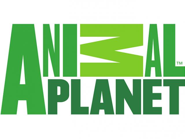 animal-planet-logo1-640x480.png