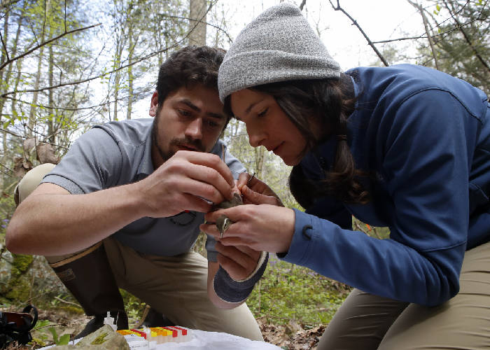 Tennessee River Gorge Trust avian and research technicians Eliot Berz, left, and Holland Youngman work to attach a geolocator to a Louisiana waterthrush after catching it along the Bee Branch tributary on Thursday, April 19, 2018 in Signal Mountain, TN. - Photo by C.B. Schmelter