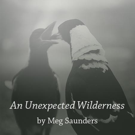 unexpectedwilderness.jpg
