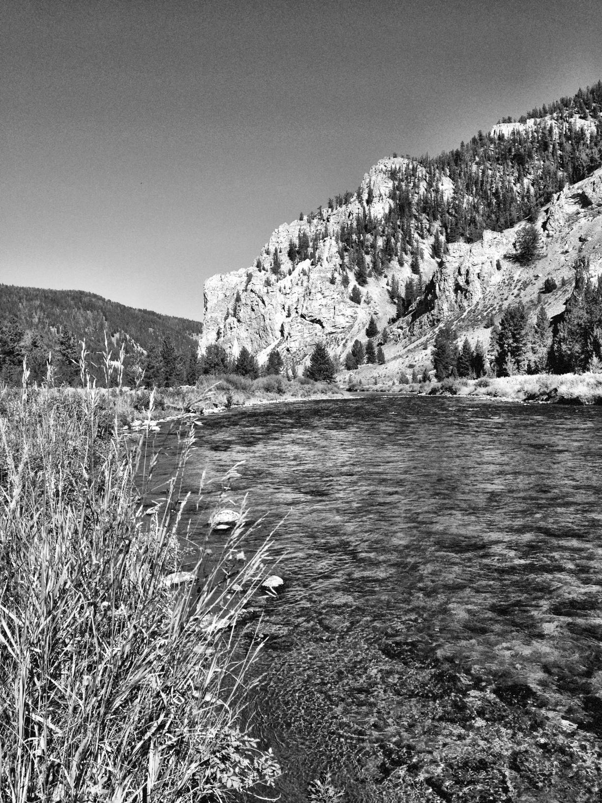 Gallatin River, Montana   Purchase
