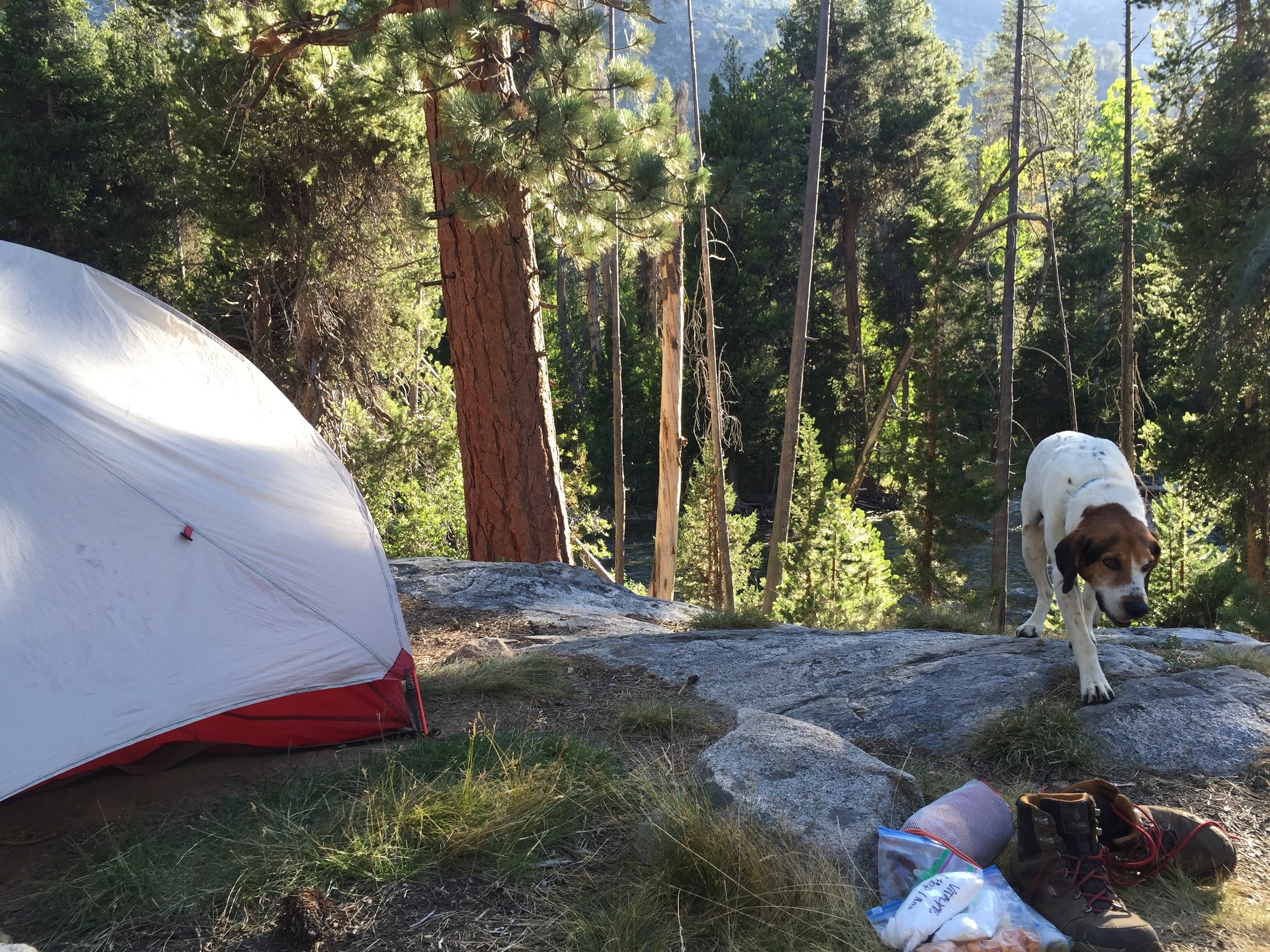 Day 8: camped near Muir Trail Ranch, just above the San Joaquin River. we were visited by one of the resident dogs of MTR. We found the dogs to be much friendlier than the staff.