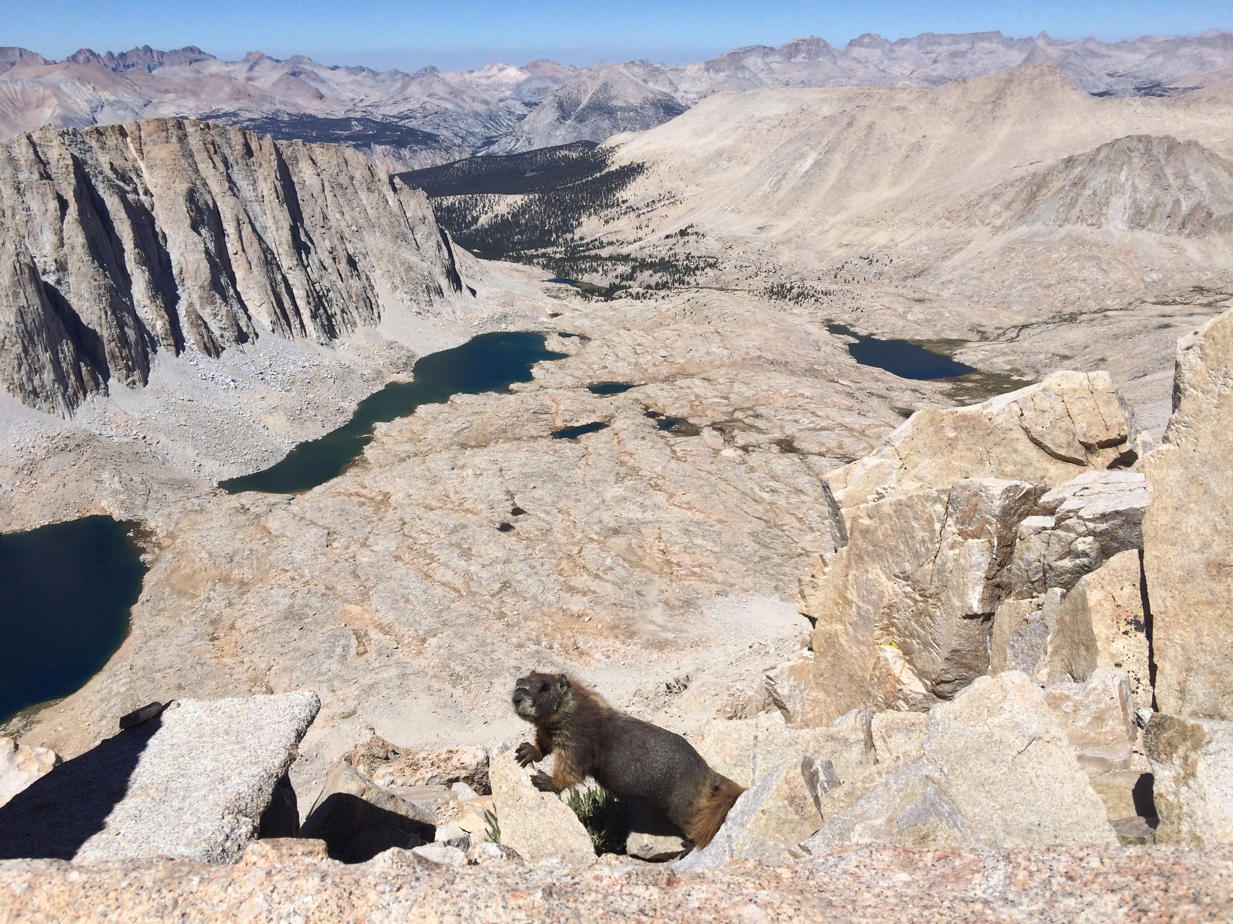 A well-fed marmot looking for a handout at Trail Crest (13,484'), overlooking Hitchock Lakes.