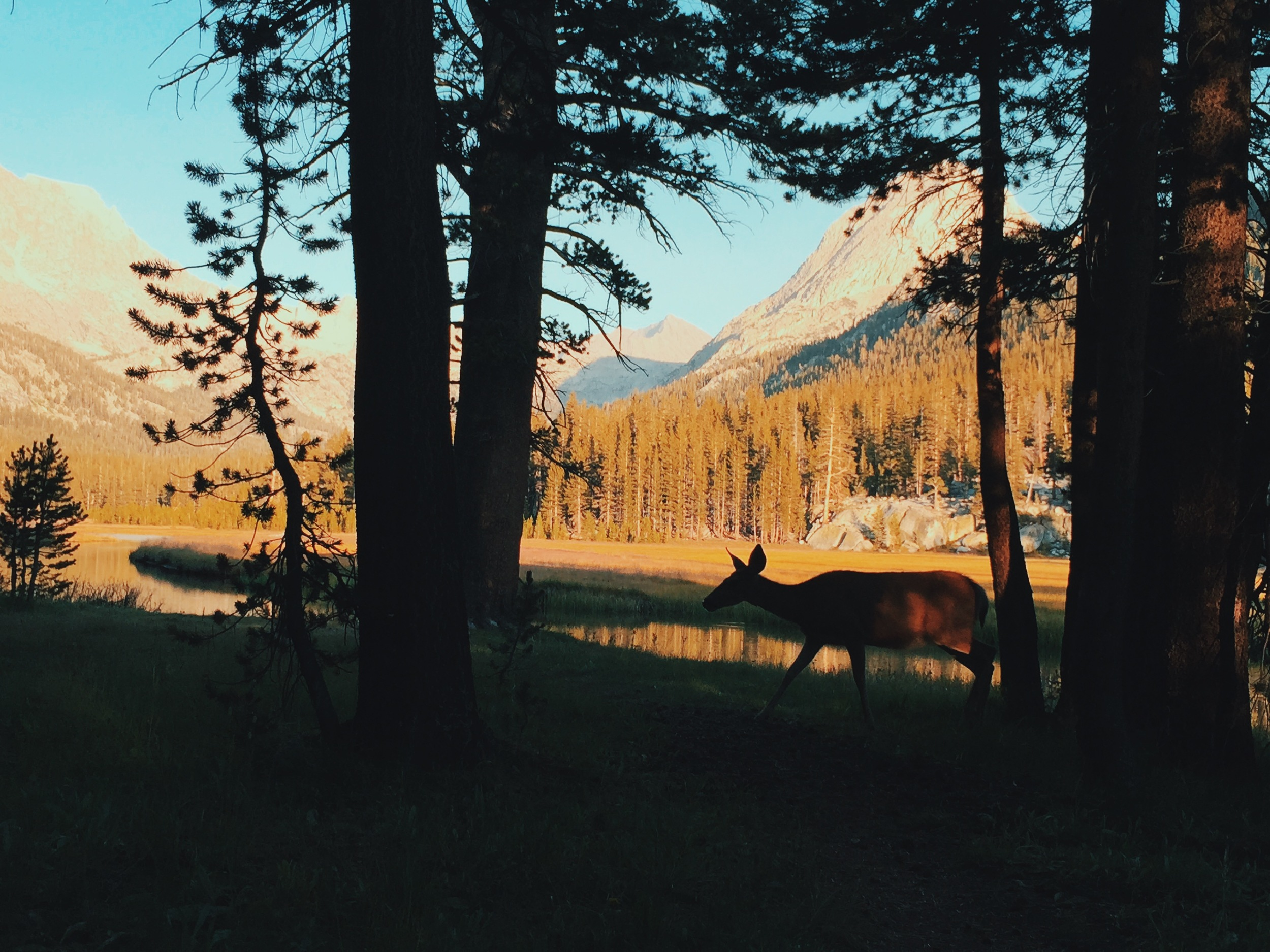 The deer didn't seem to mind sharing the lovely views.