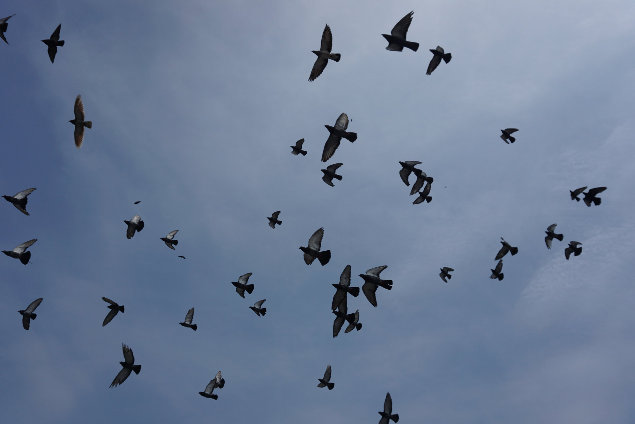 """Birds flying high, you know how I feel"" -  near the catacombs of the Basilica de San Francisco"