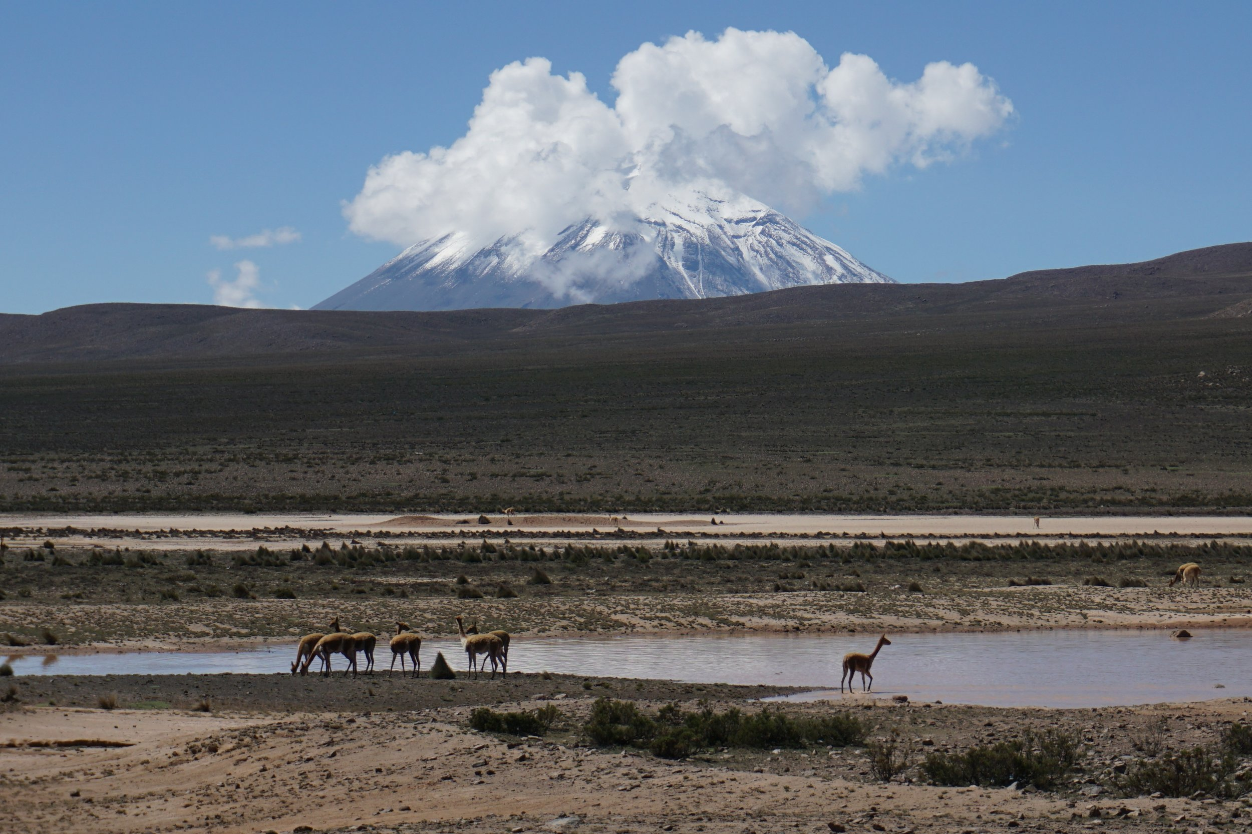 Vicuñas and a distant volcano in the altiplano a couple of hours north of Arequipa.