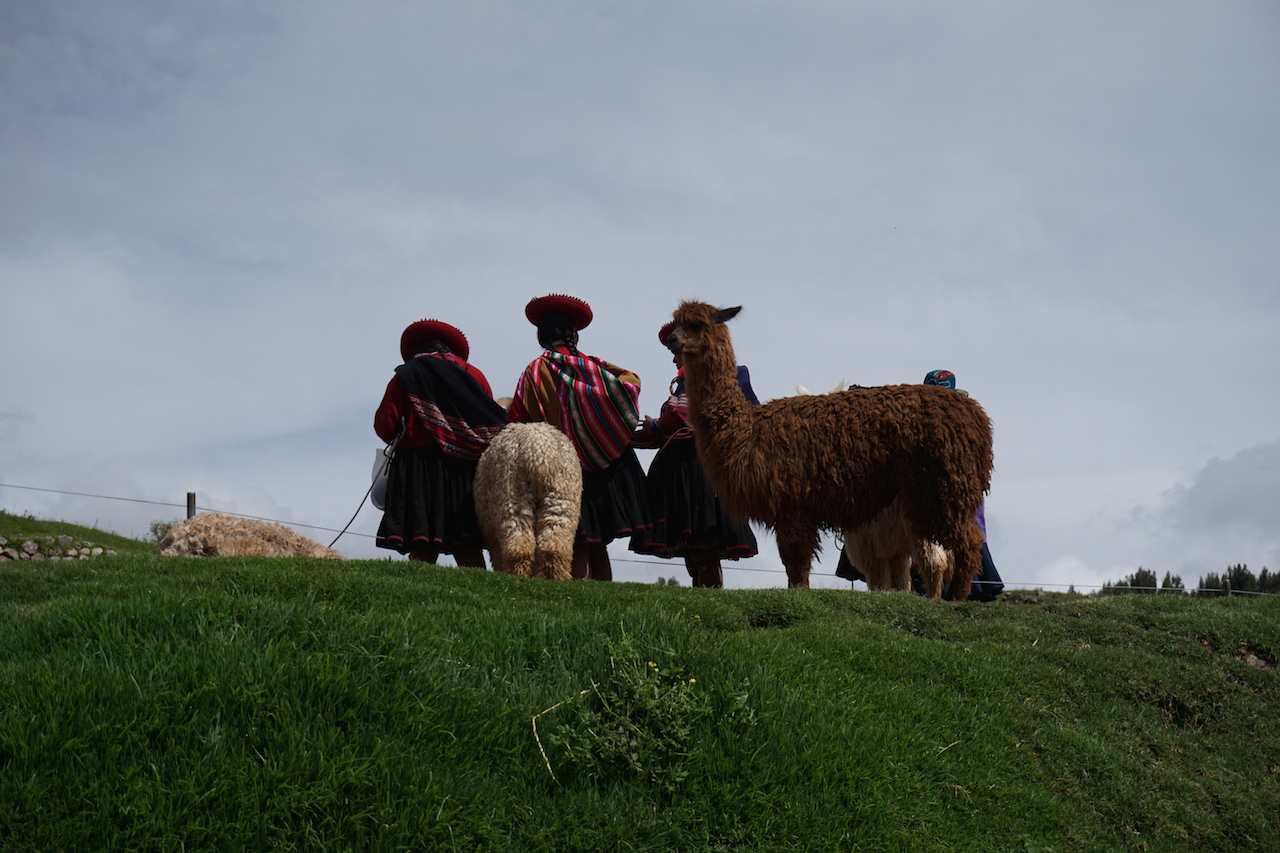 Traditionally-clad ladies and their camelid friends at Sacsayhuaman