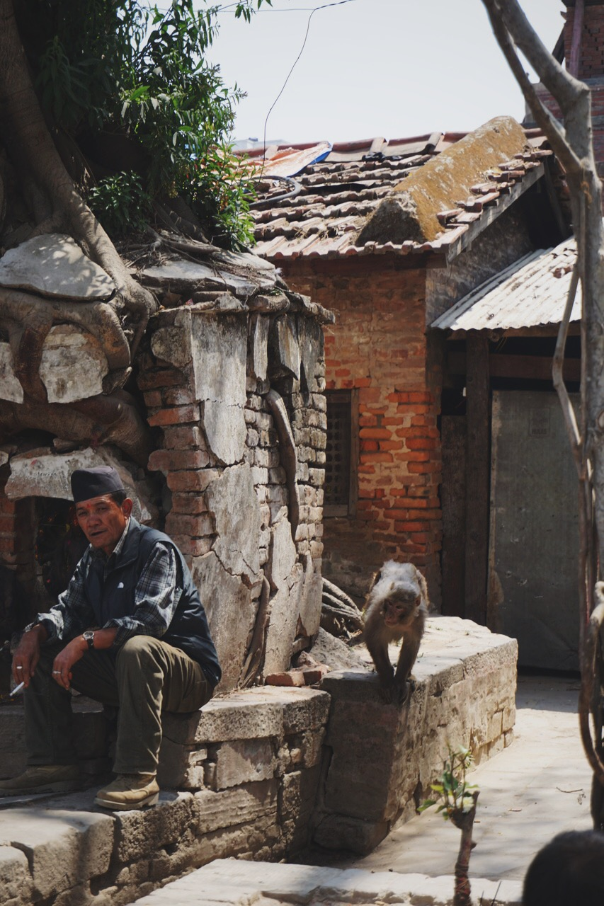 A mischievous macaque monkey sneaking up on a local, Durbar Square