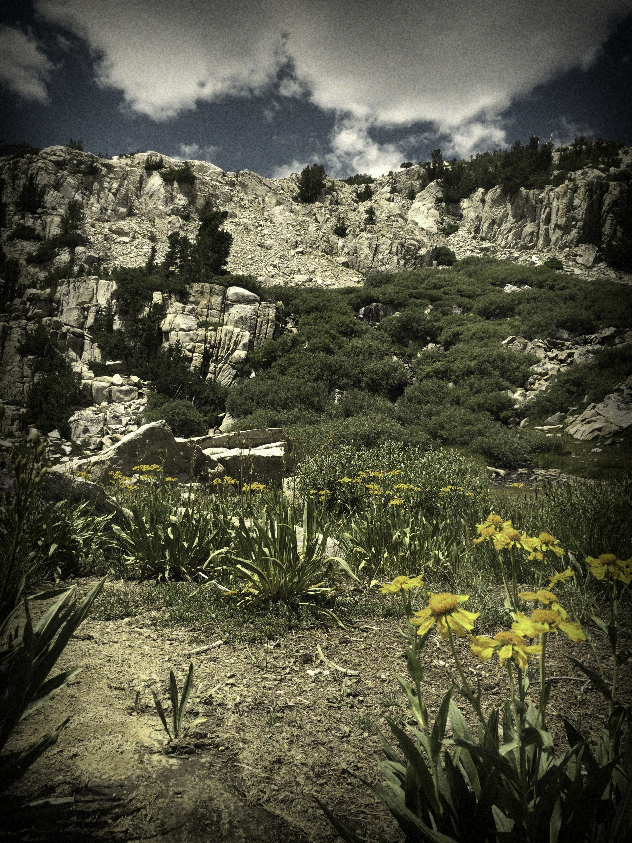 Flowers and Granite.jpg