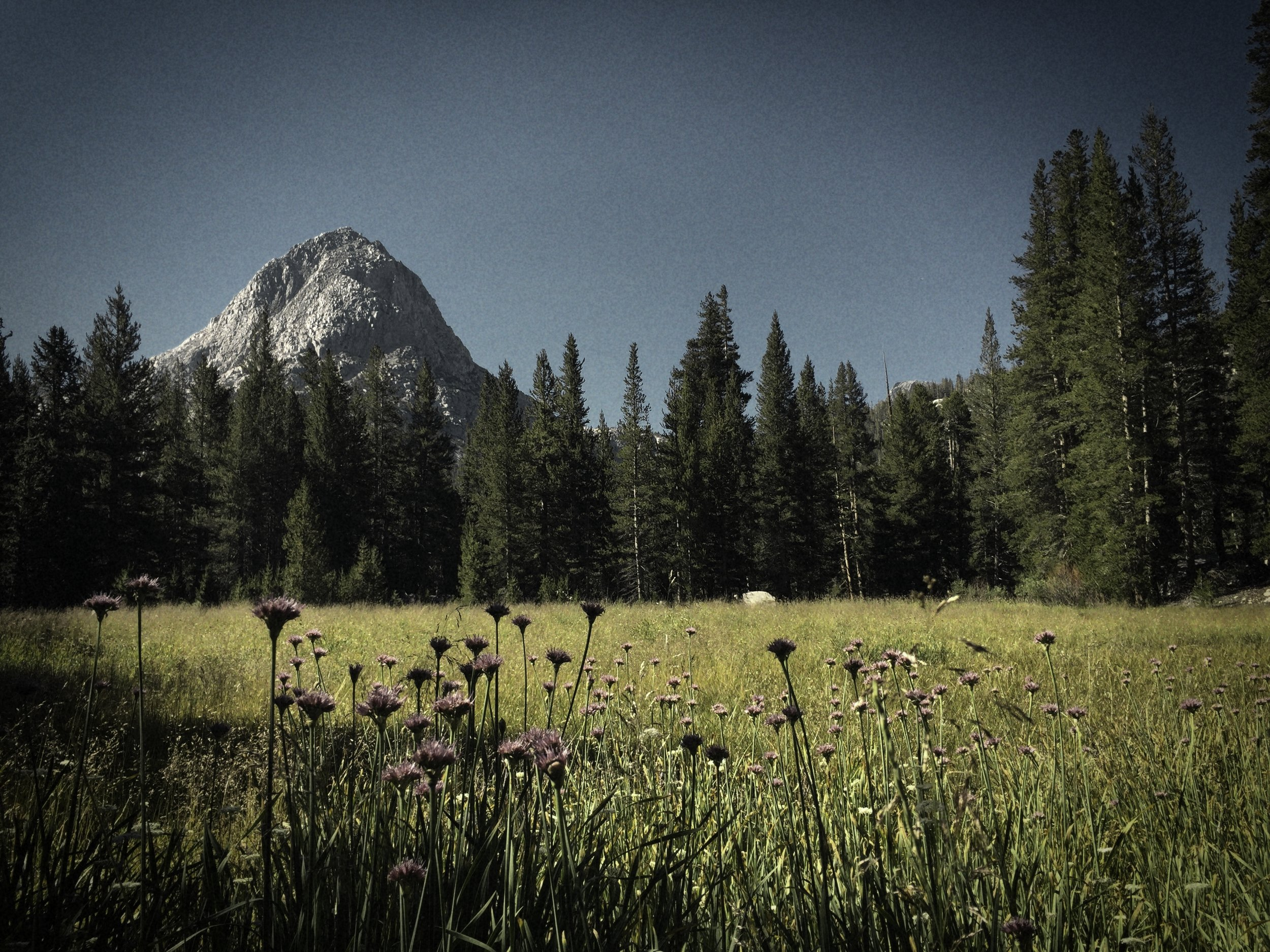 Meadow and Dome.jpg