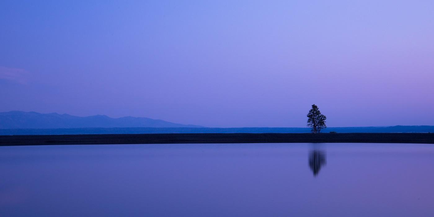 15Serenity Tree.jpg
