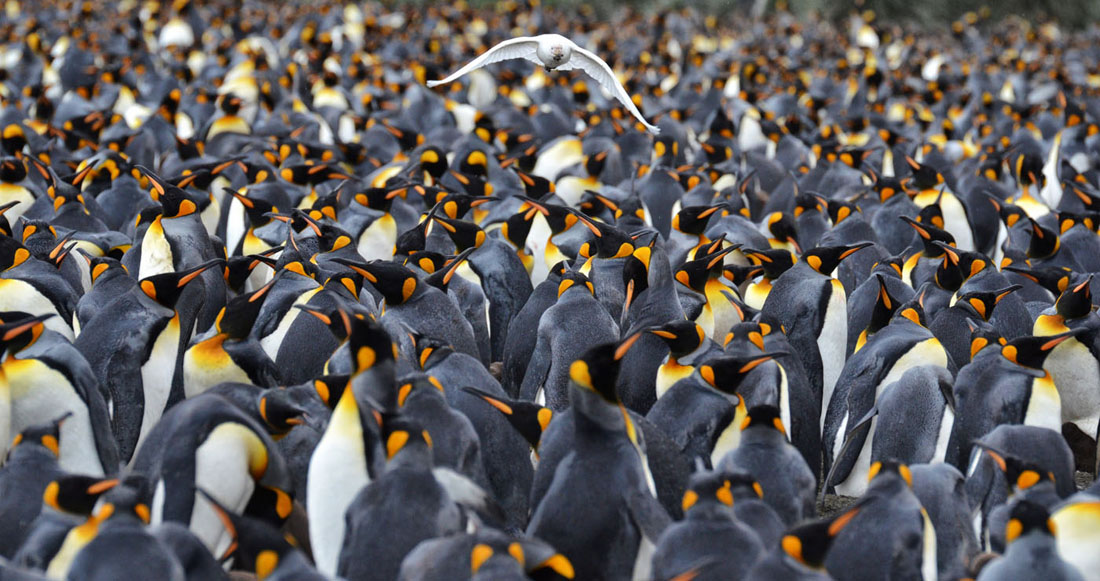 Penguin Colony.jpg