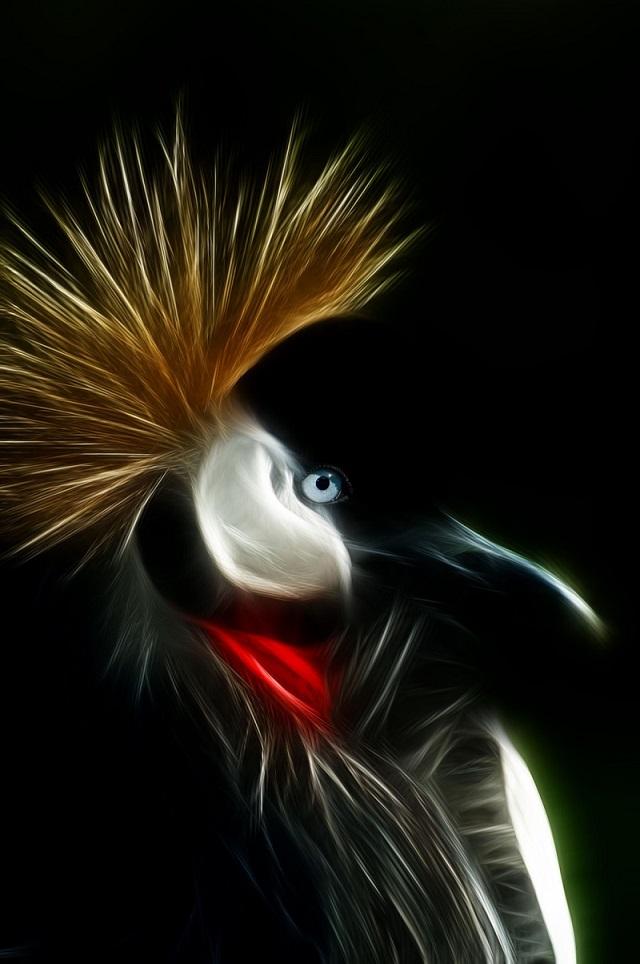 Crowned Crane.jpg