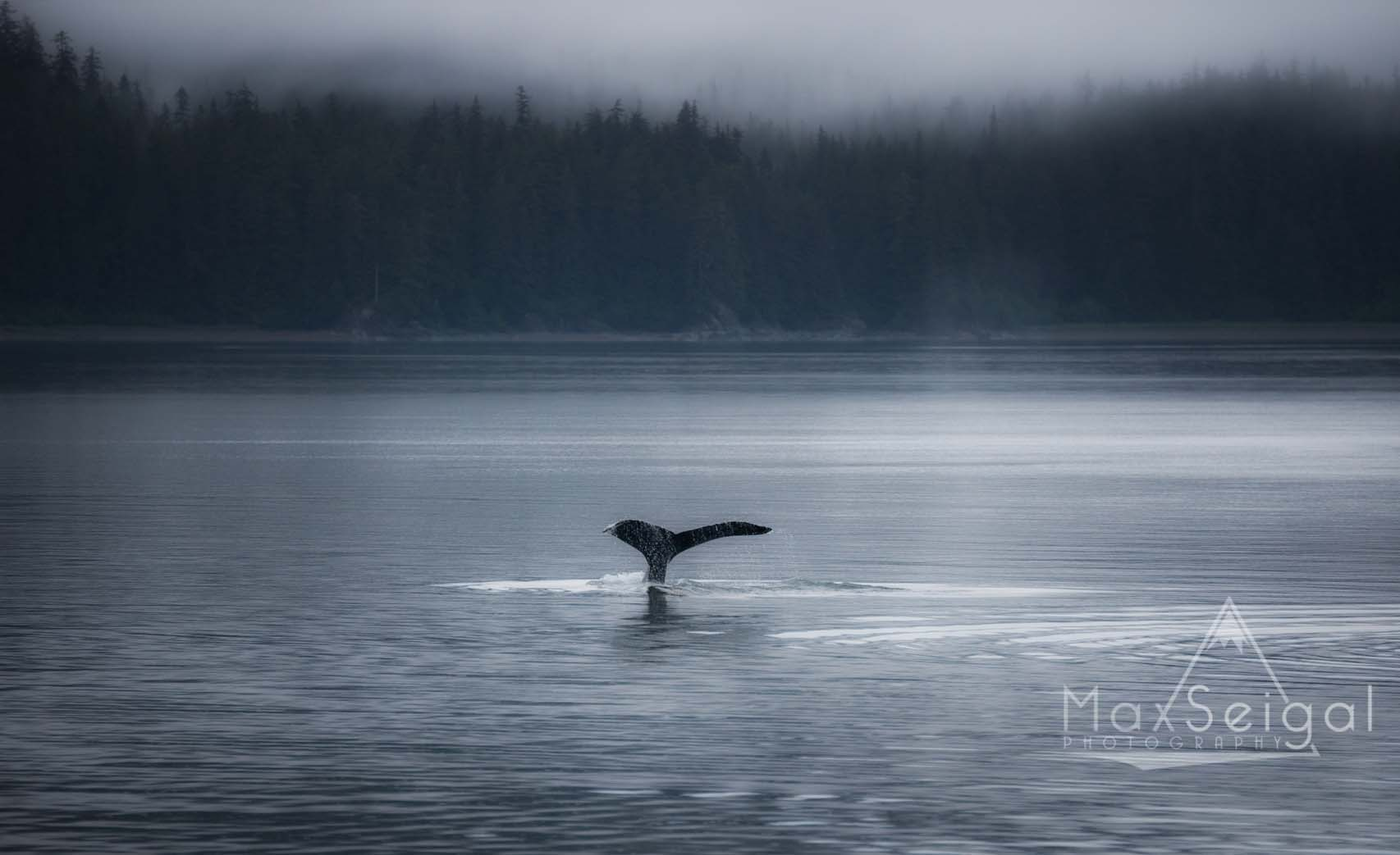 Amazing foggy morning watching humpback whales