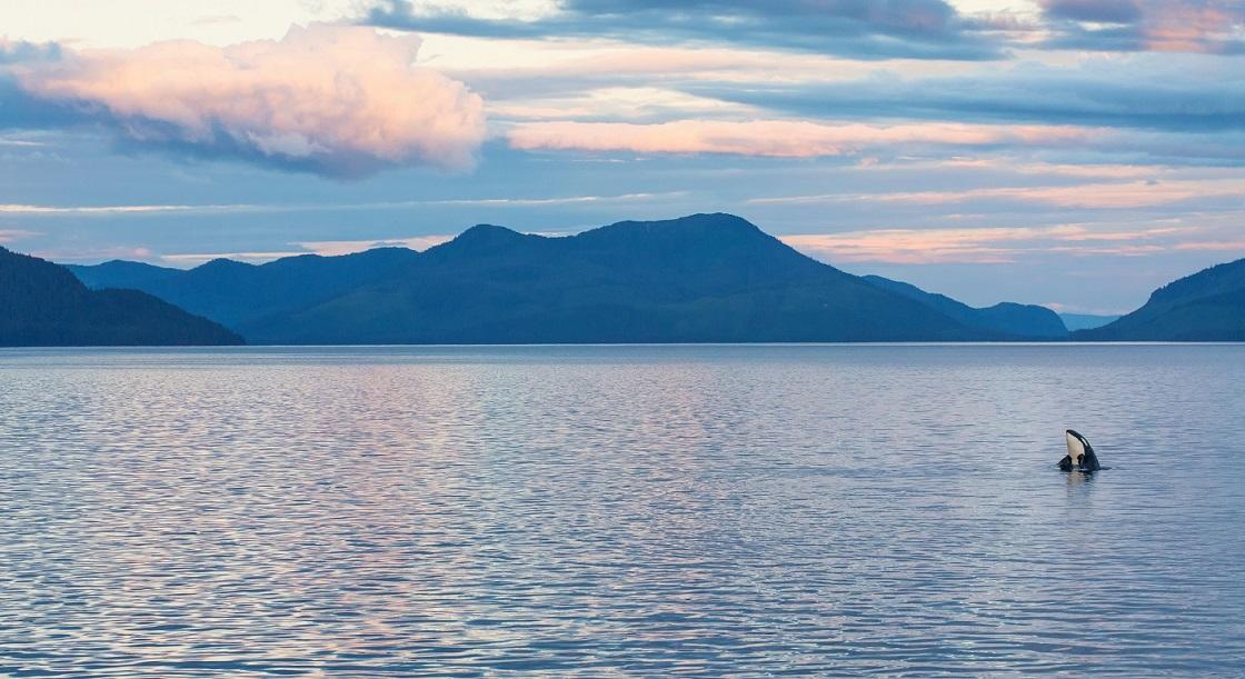 Dreaming of Alaska.jpg