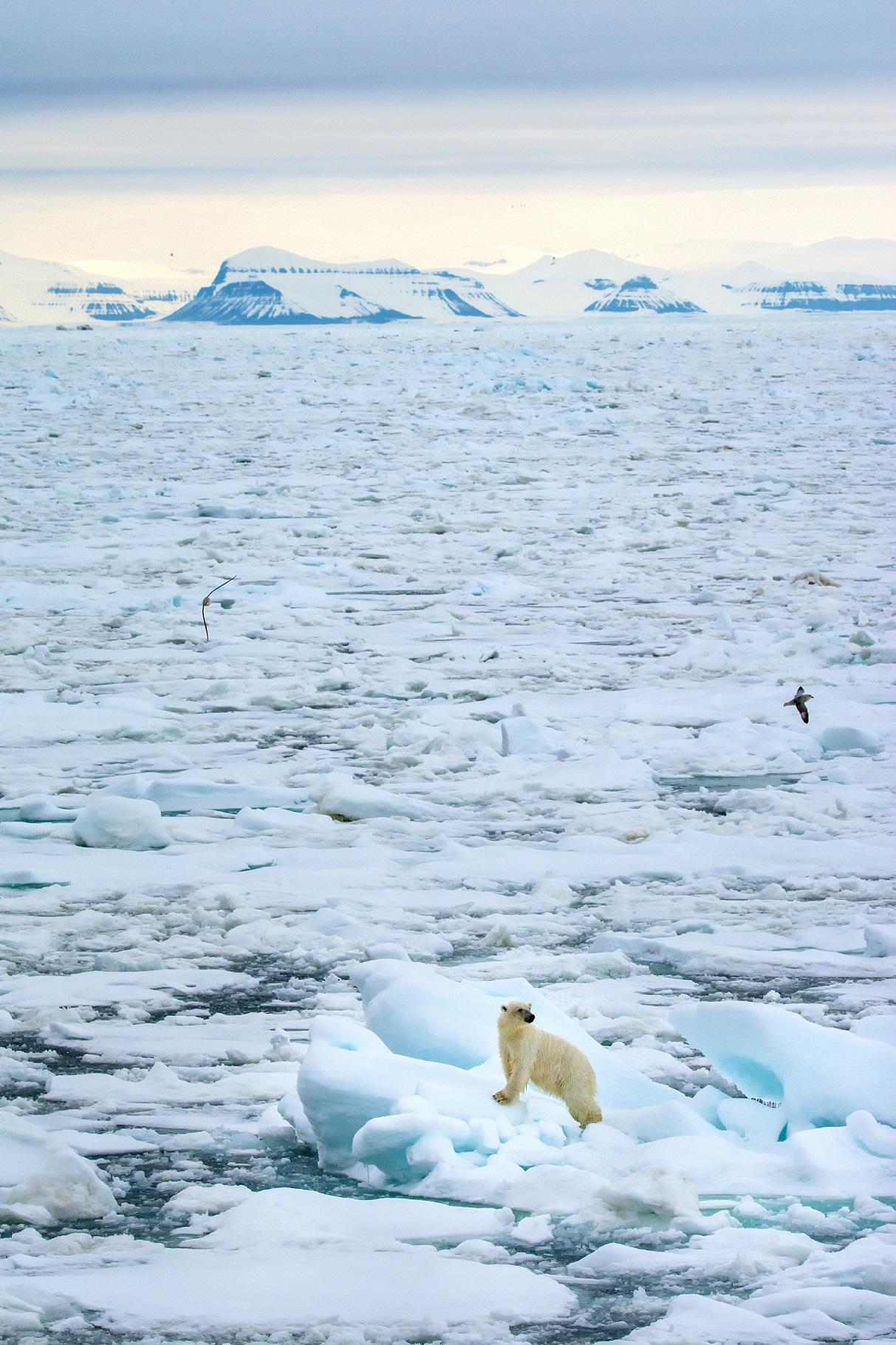 Polar Spring.jpg