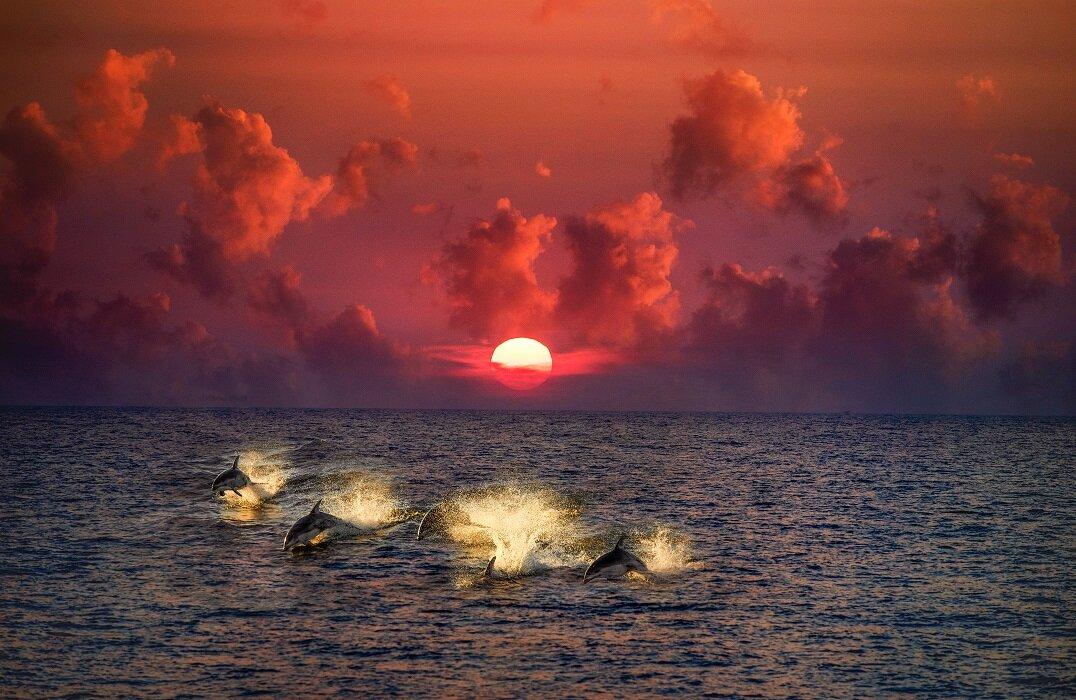 Elysian Sunset.jpg