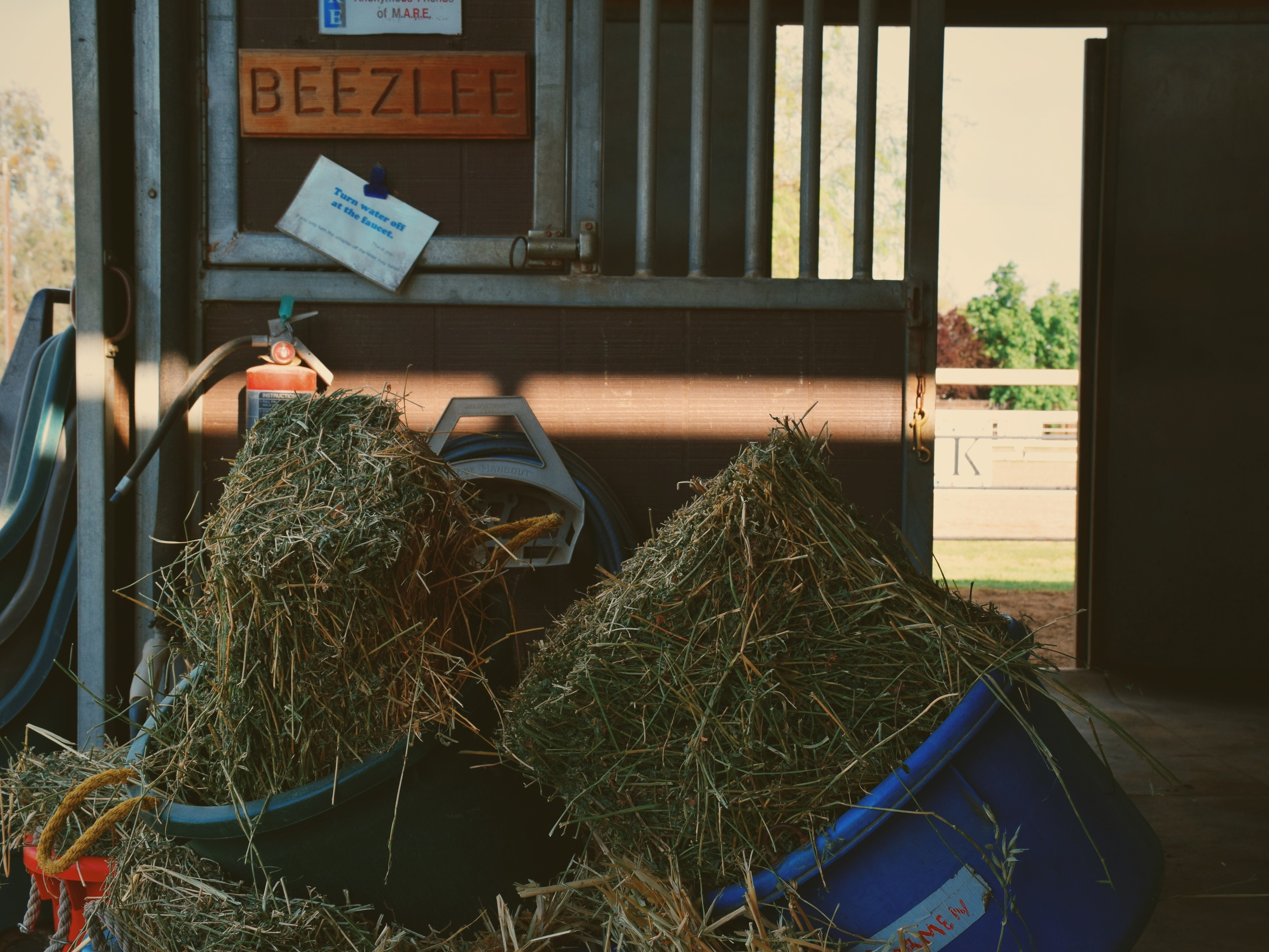 Mrs. Beezlee offers her services as an equine-therapist to help riders build confidence, trust, and respect through the rider-horse bond.