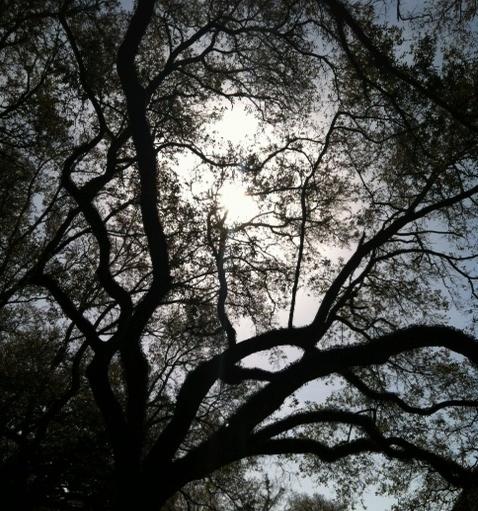 sunshine and trees.jpg