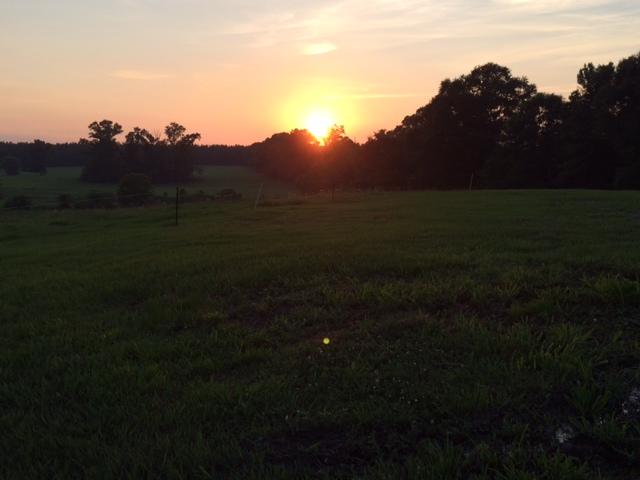 summer sunsets.jpg