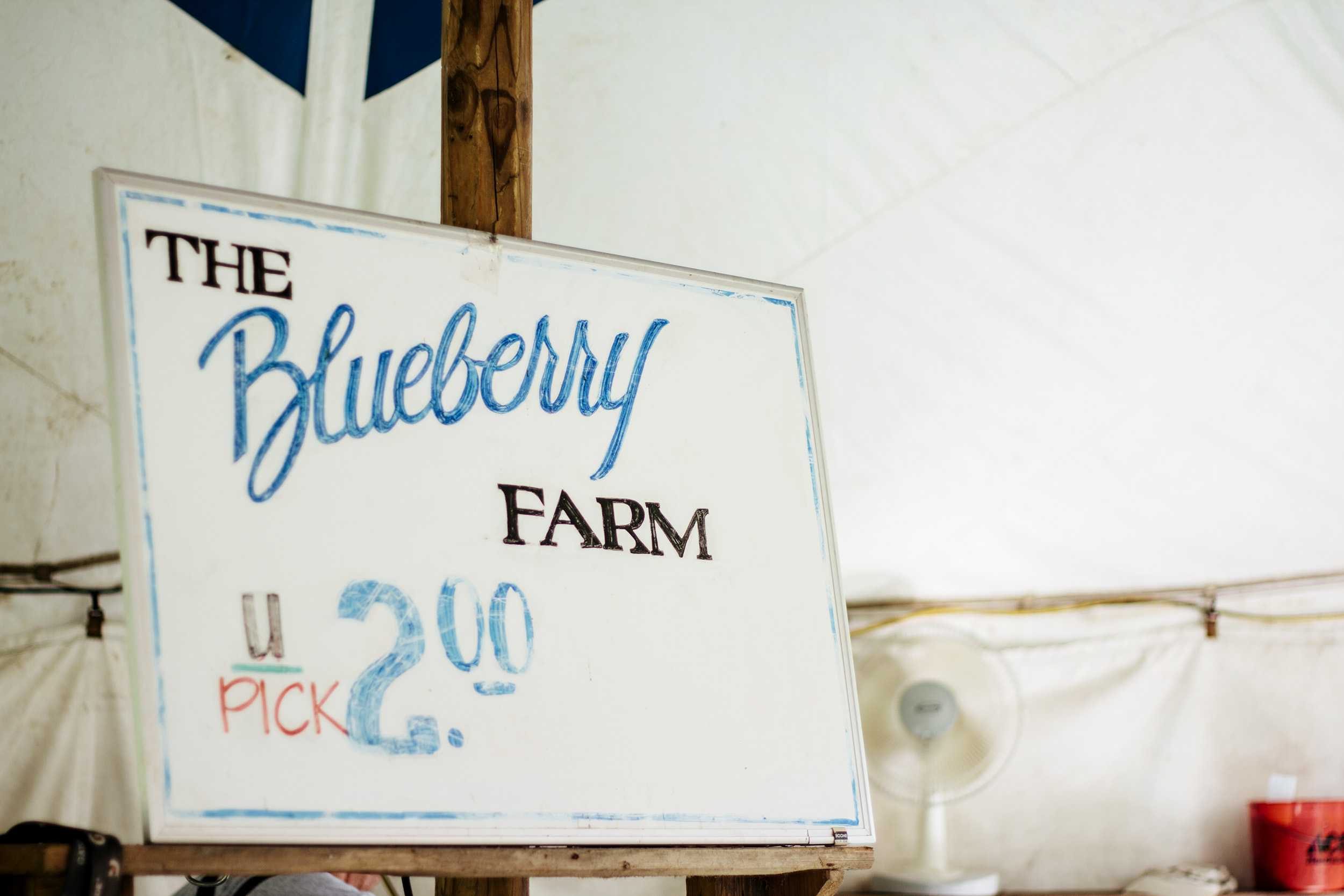 blueberry farm sign.jpg