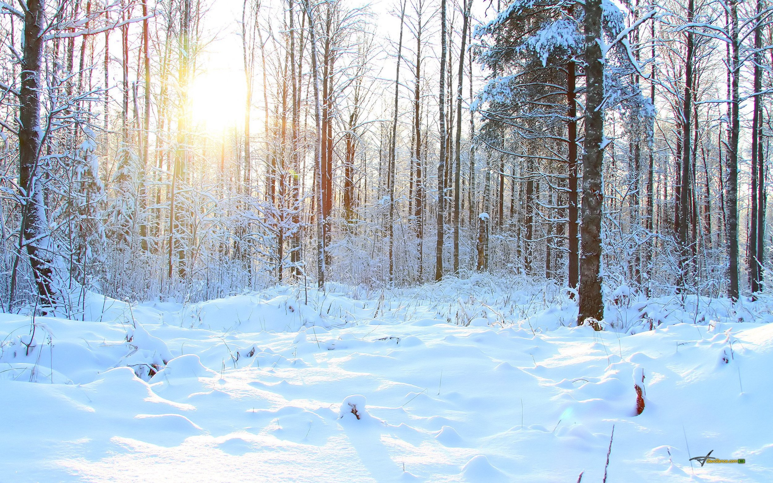 forest-tree-snow-winter-sun.jpg