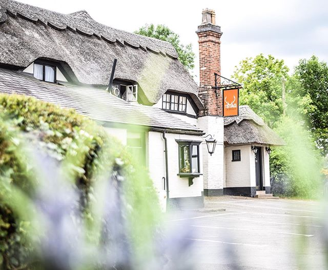 Country pub 🌿🥾 . . . . . #loveourpub #villagelife #villagepub #offchurch #countrypub #picturesque #lavender #stag #goodpub #awardwinningpub #summer #alfresco #realale #finewine #pubgarden #goodfood