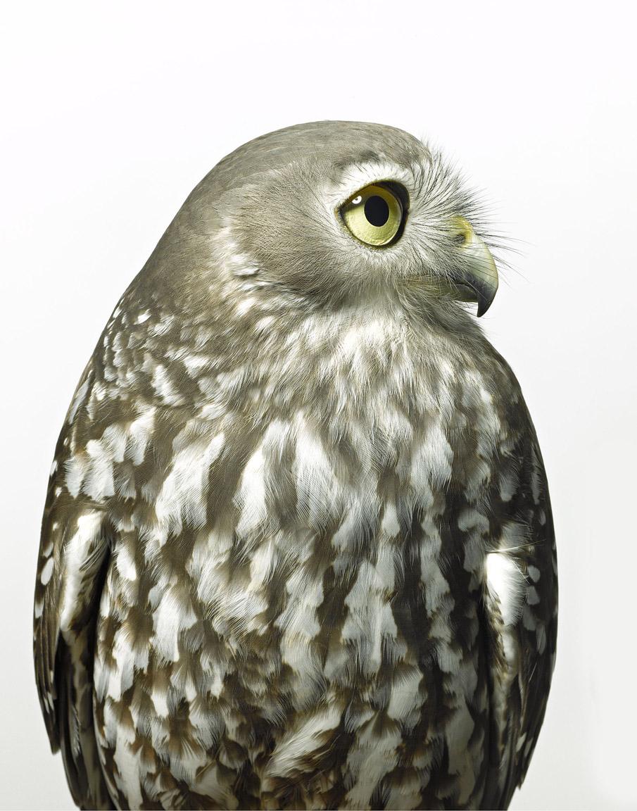 _OWL-melbourne-water_00027_-Print.jpg