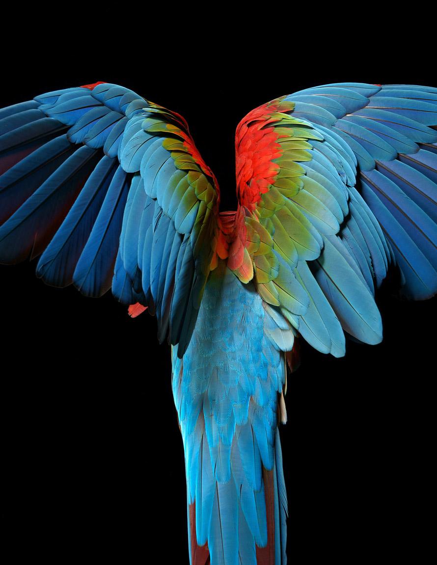 macaw_123-EA-Final-Print-File.jpg