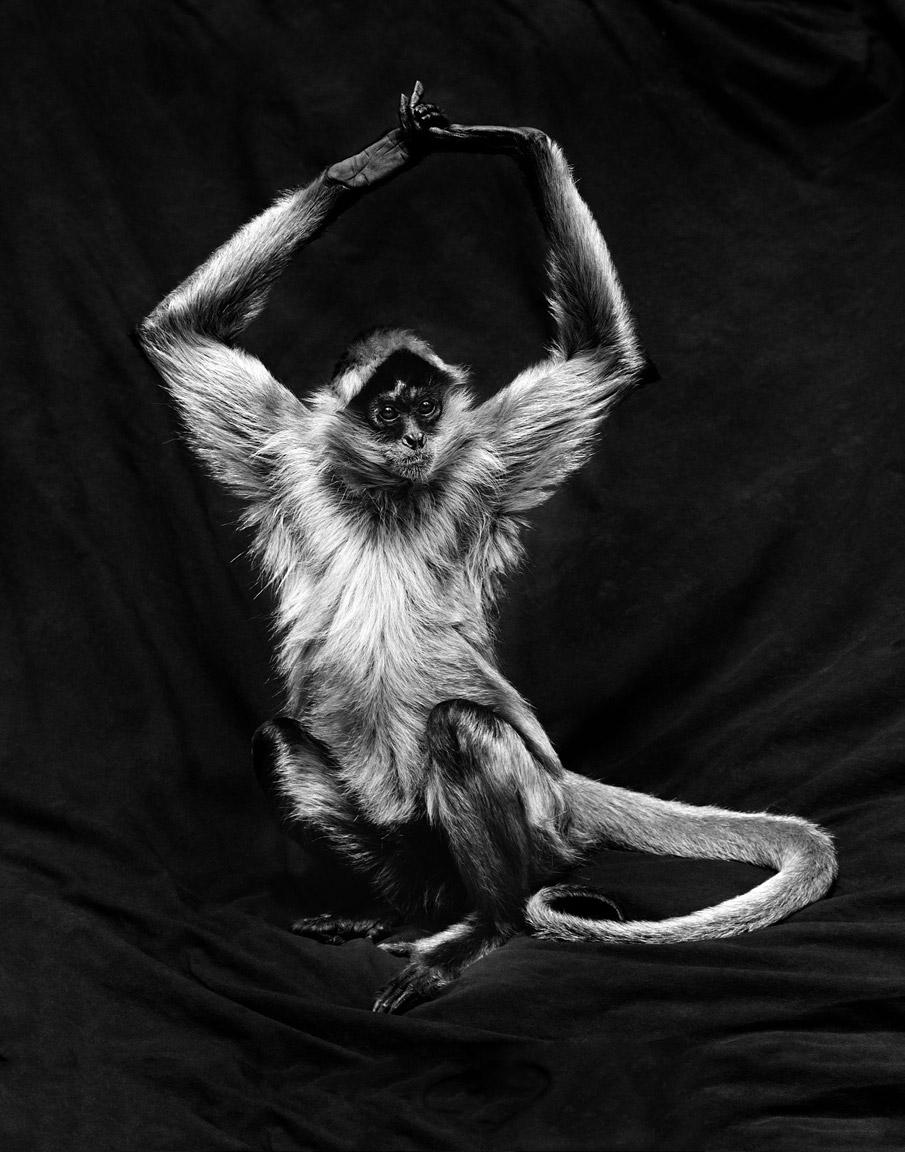monkey_spider.jpg