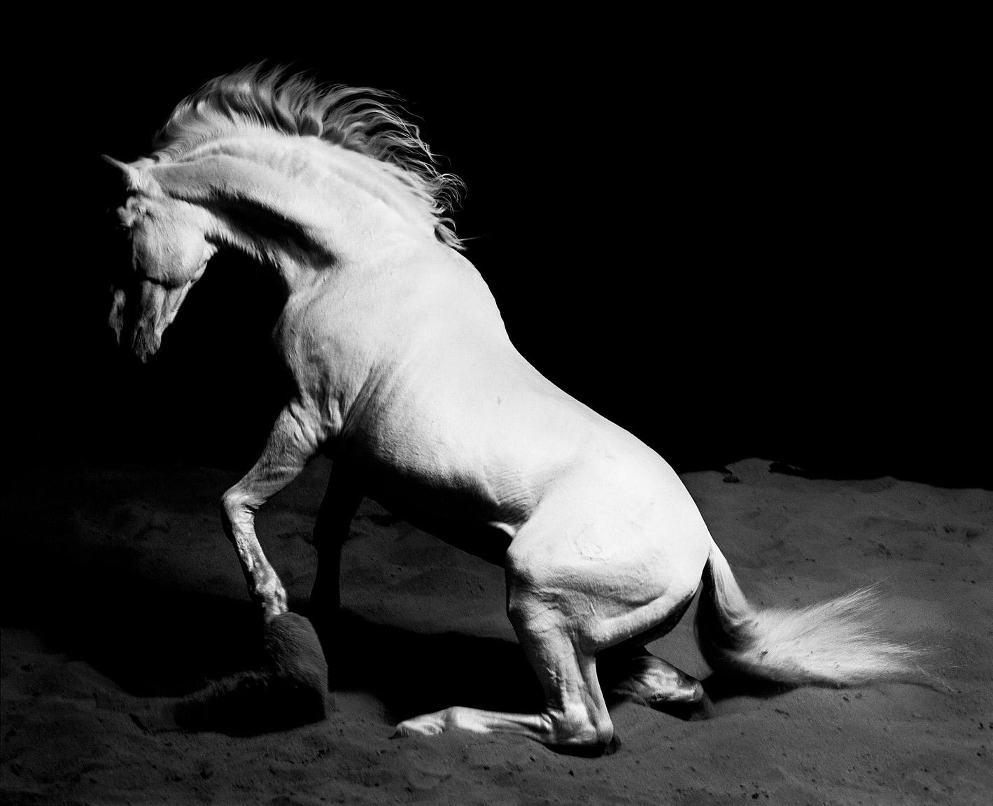 Gary-Stallion-Rising.jpg