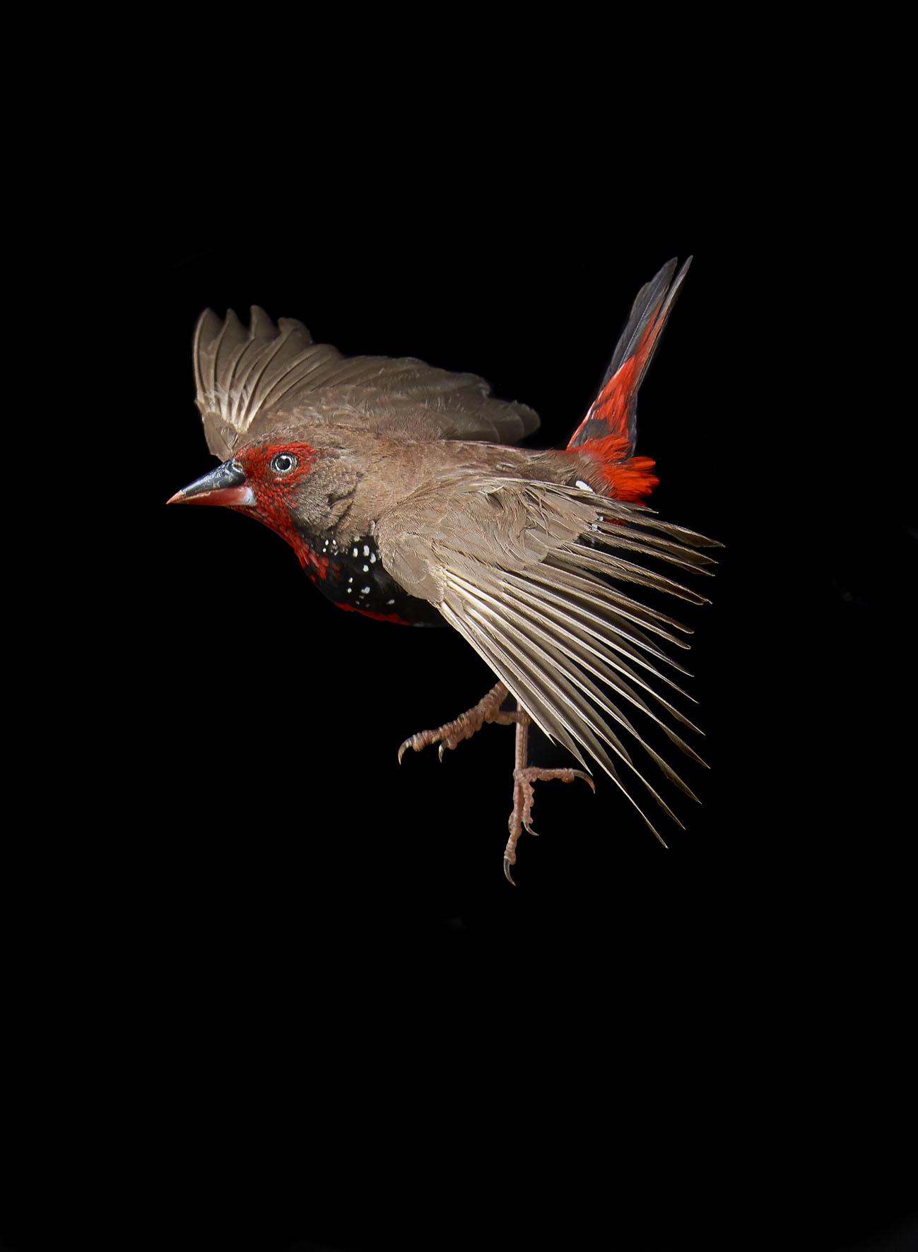 Finch_2_042 2.jpg